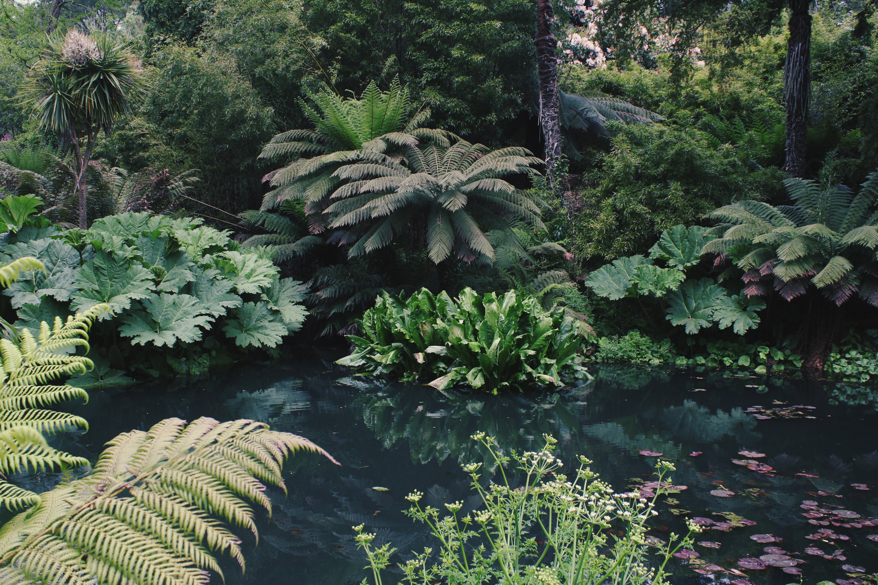 Fern Pond in the Lost Gardens of Heligan