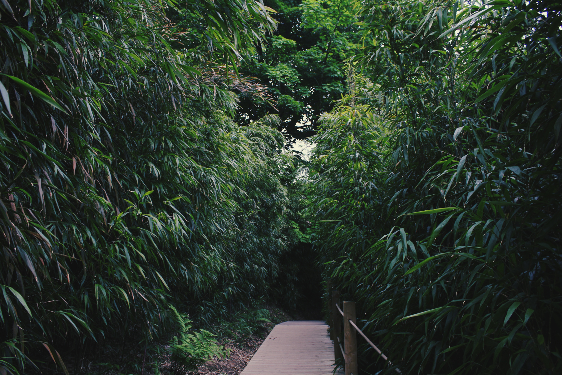 Bamboo Walkway, Lost Gardens of Heligan, Cornwall