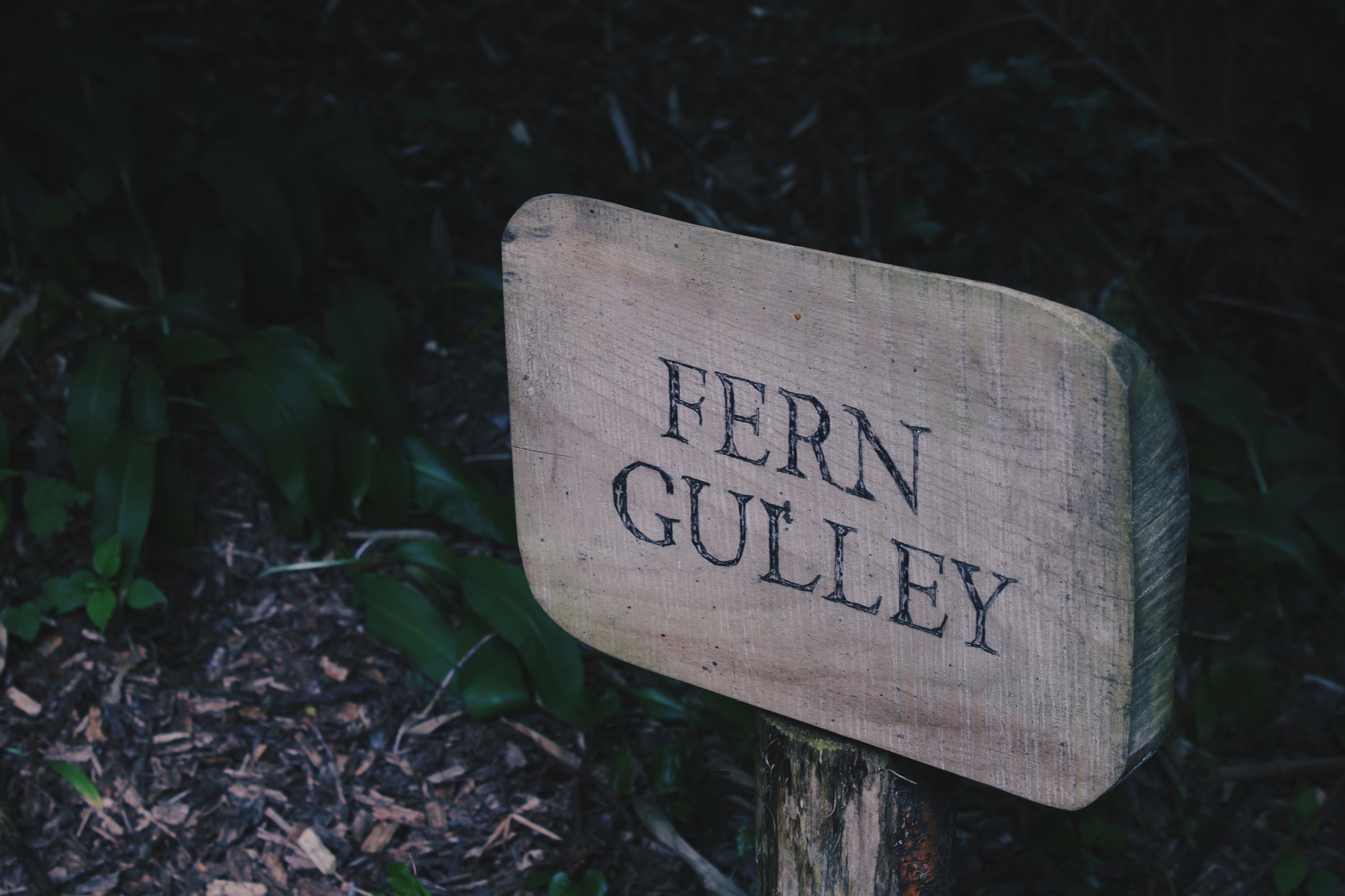 Fern Gulley Sign, Lost Gardens of Heligan