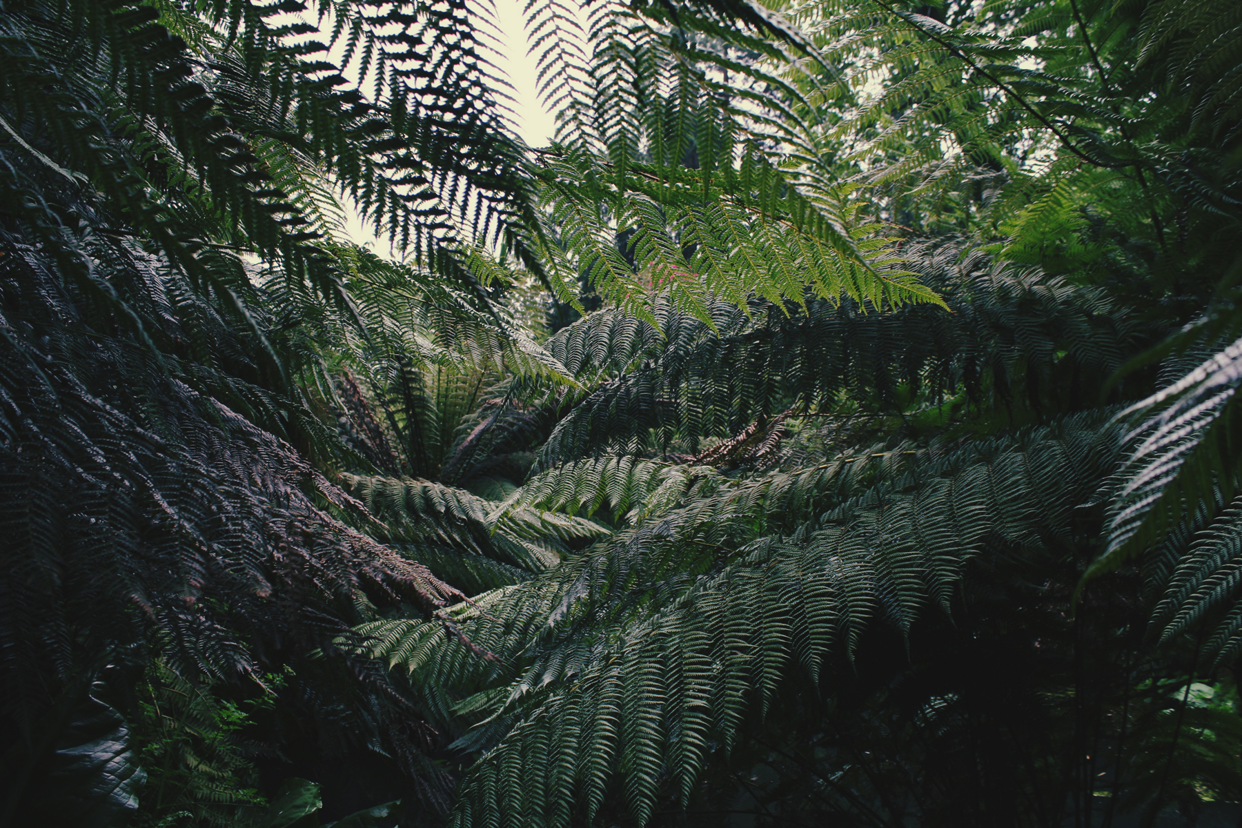 Fern Forest in the Lost Gardens of Heligan