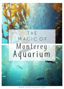 Monterey Aquarium Travel Blog