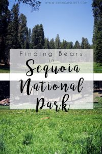Sequoia National Park Travel Diary