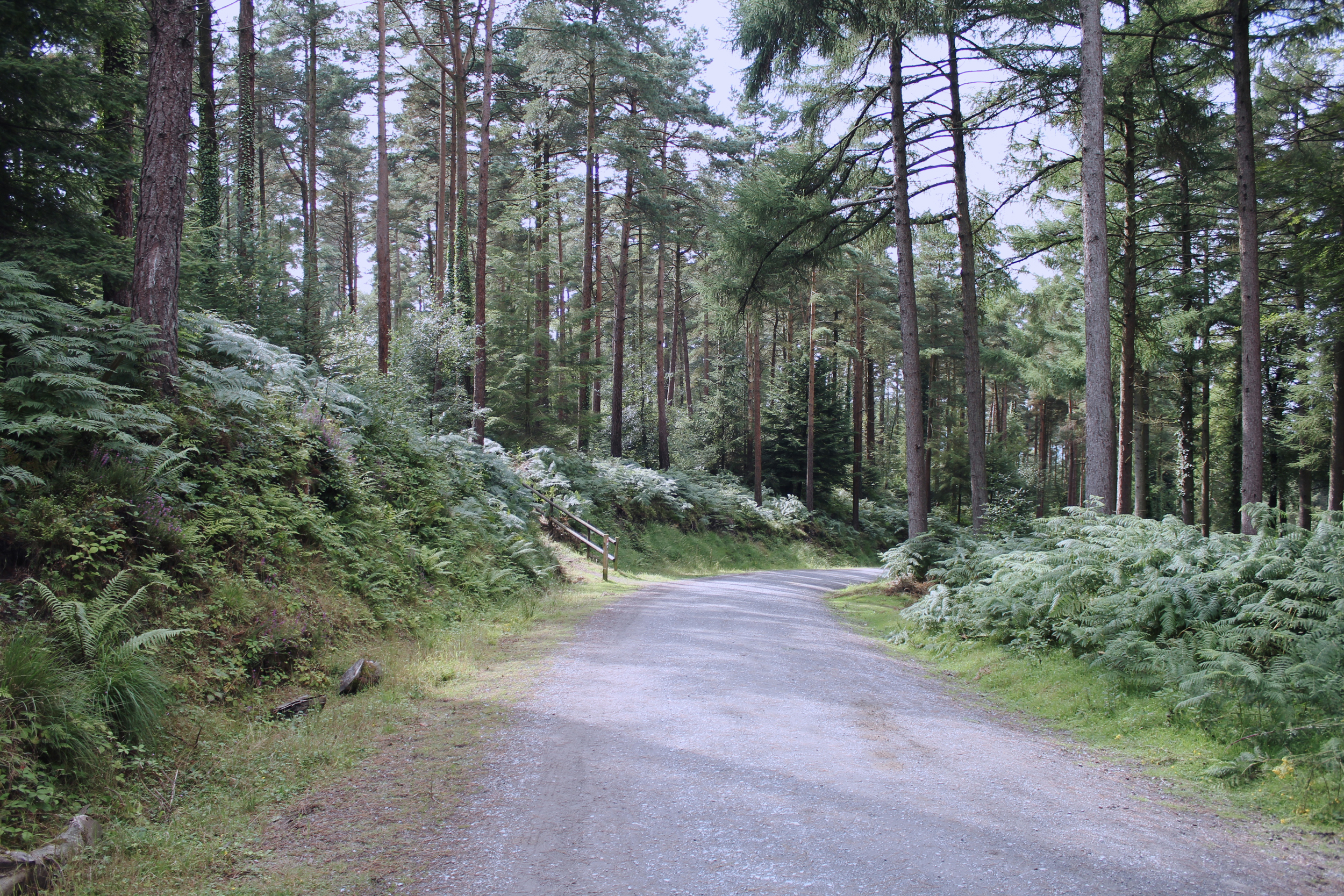 Treetop camping in Haldon Forest, Devon