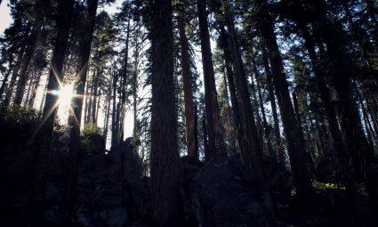 Sequoia NP California
