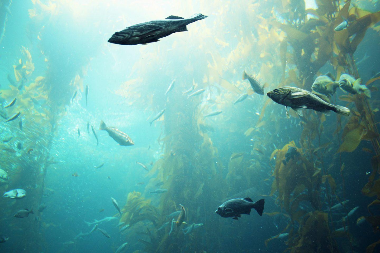 Monterey Aquarium, California Roadtrip