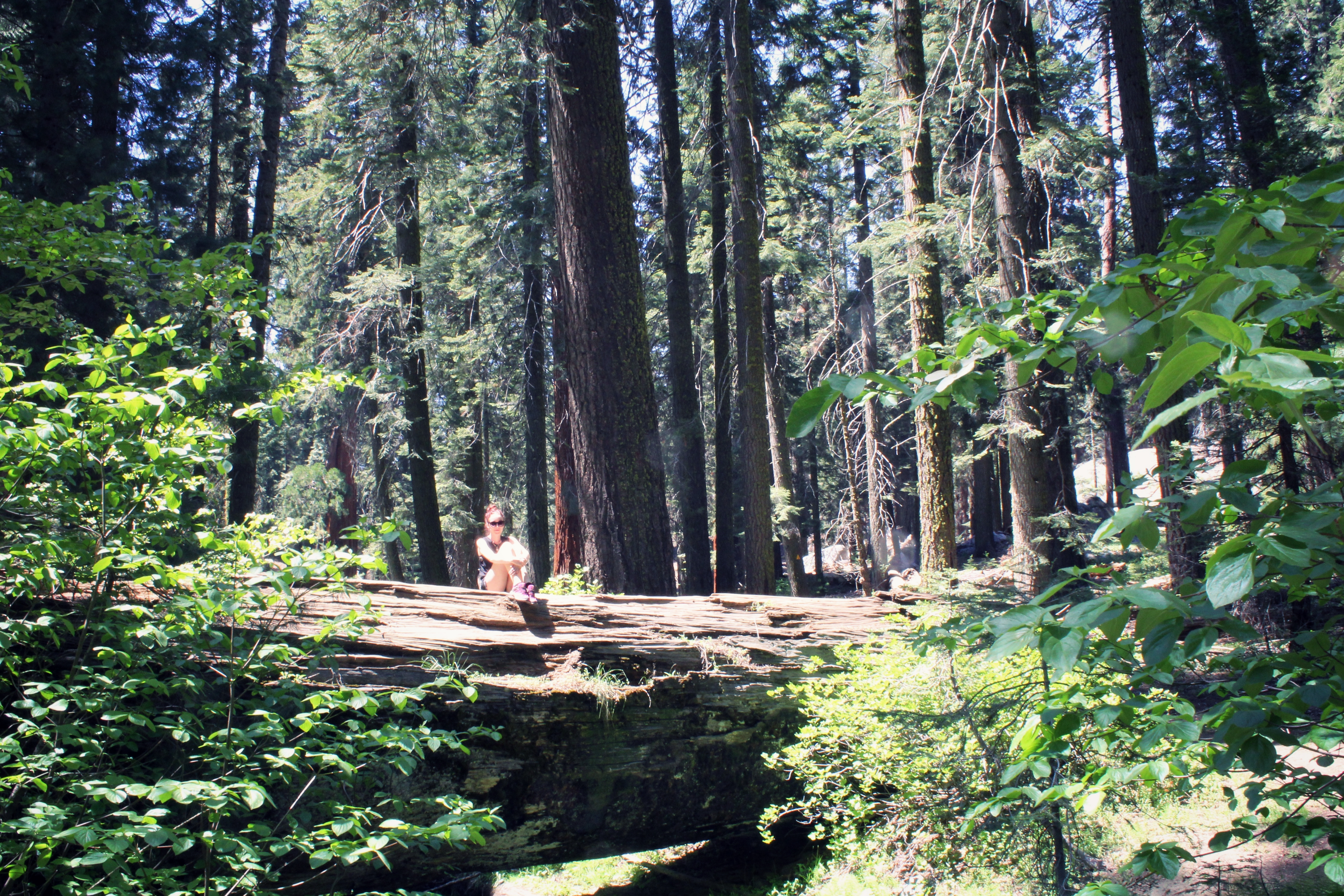 Girl sitting on a tree in Sequoia National Park