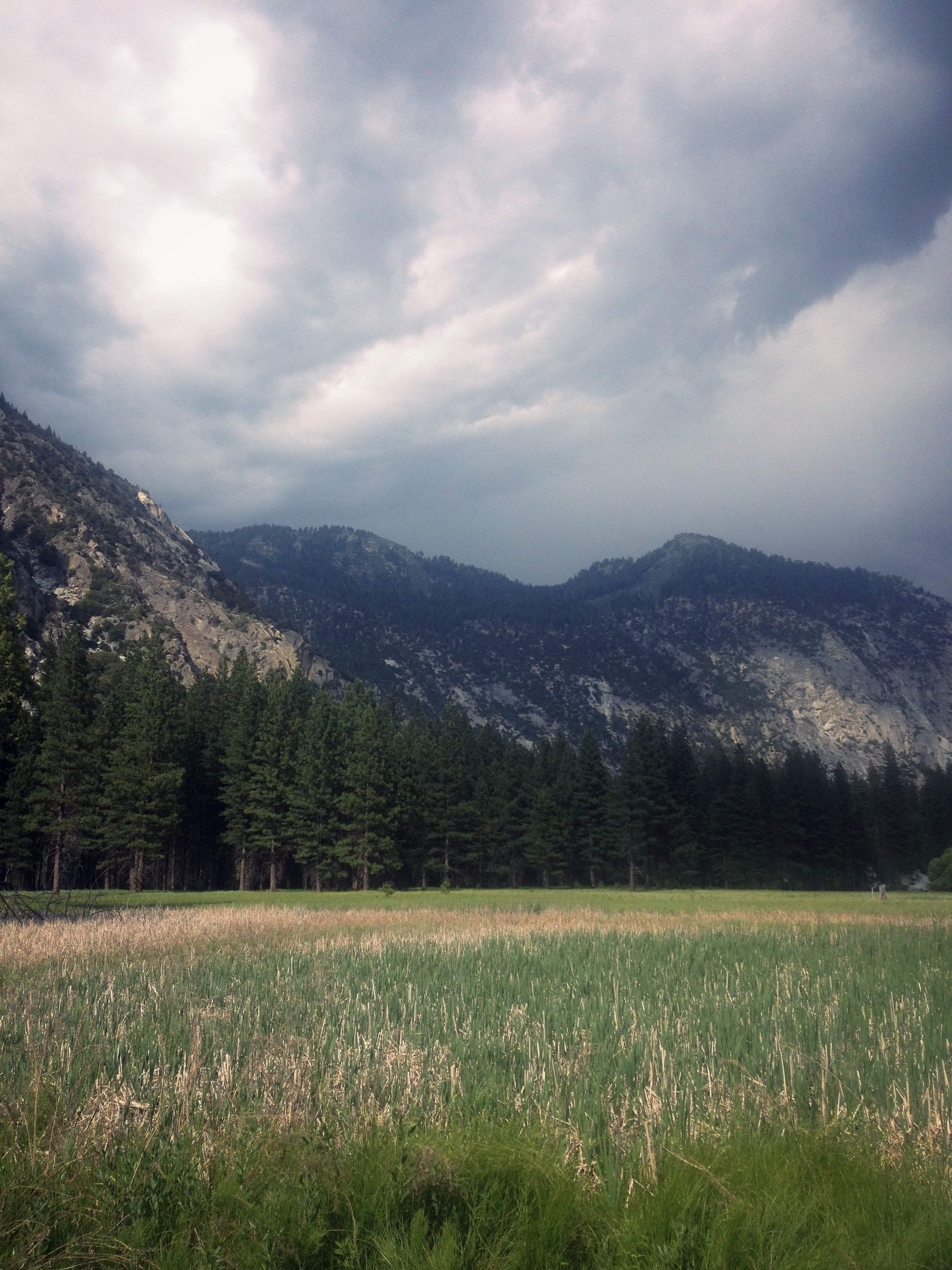 Alpine Meadow in King's Canyon California