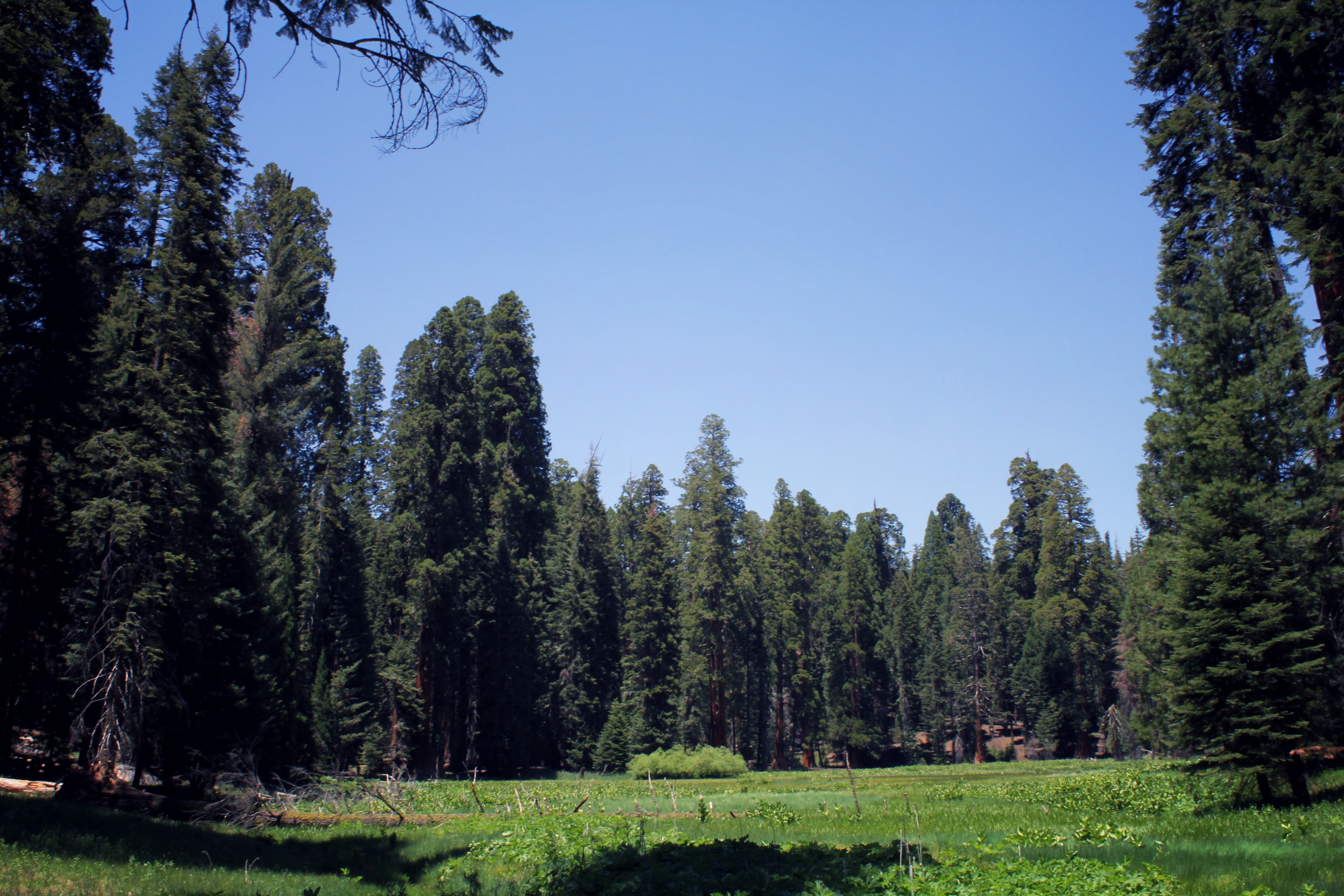 Alpine Meadow in Sequoia National Park