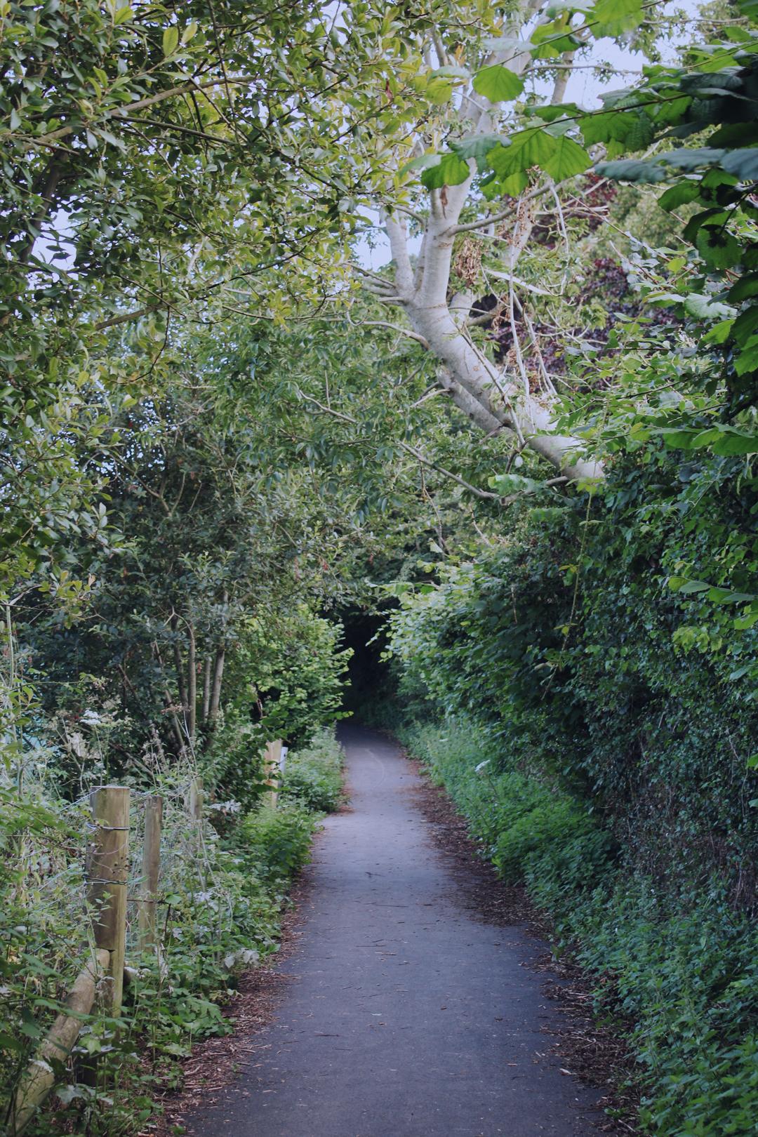 Footpath just leaving Totnes