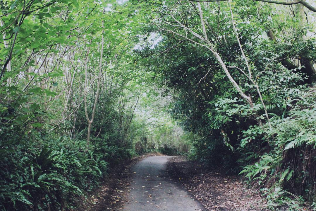 Holloway in Totnes Walk