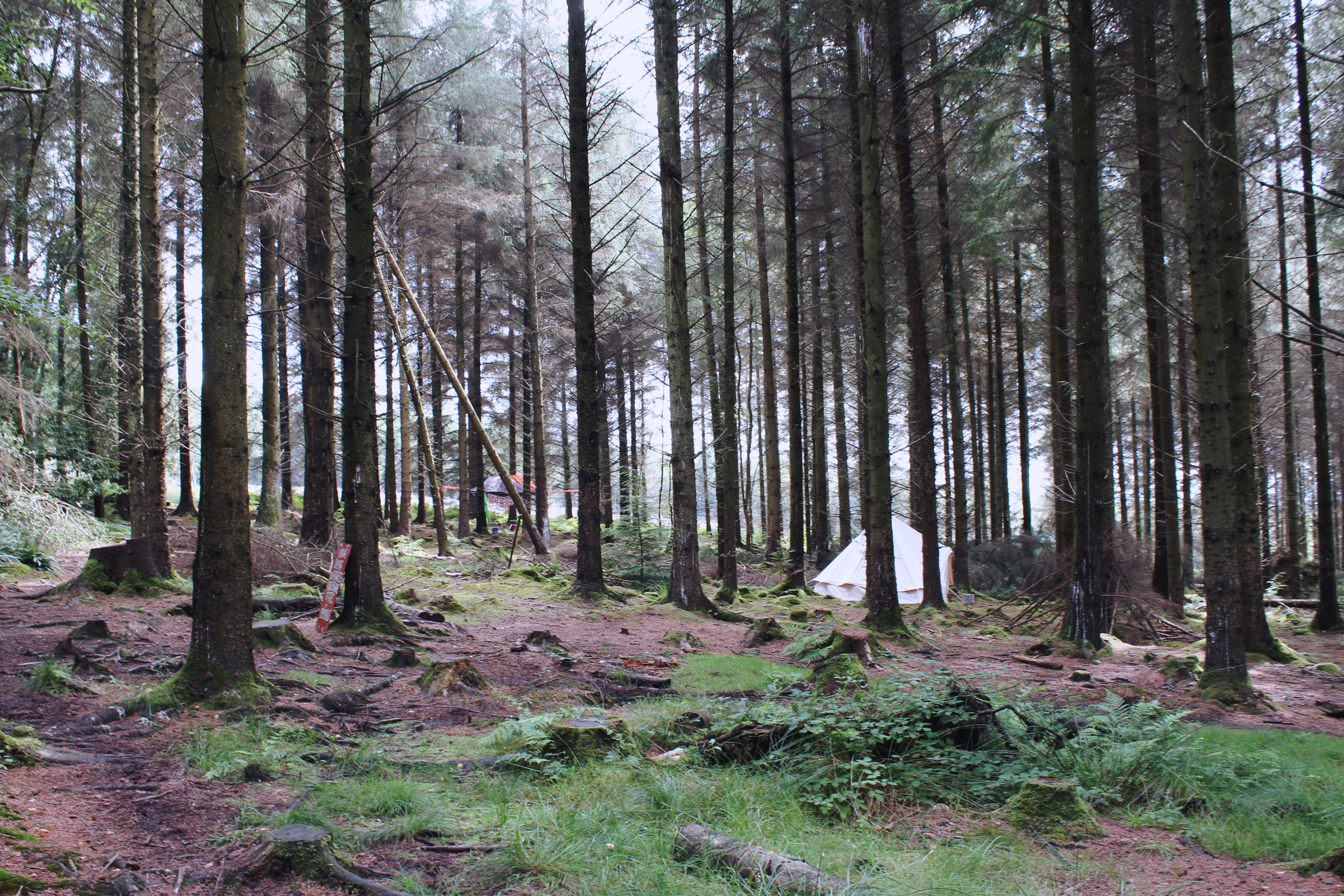 Festival bell tent in the woods, Devon