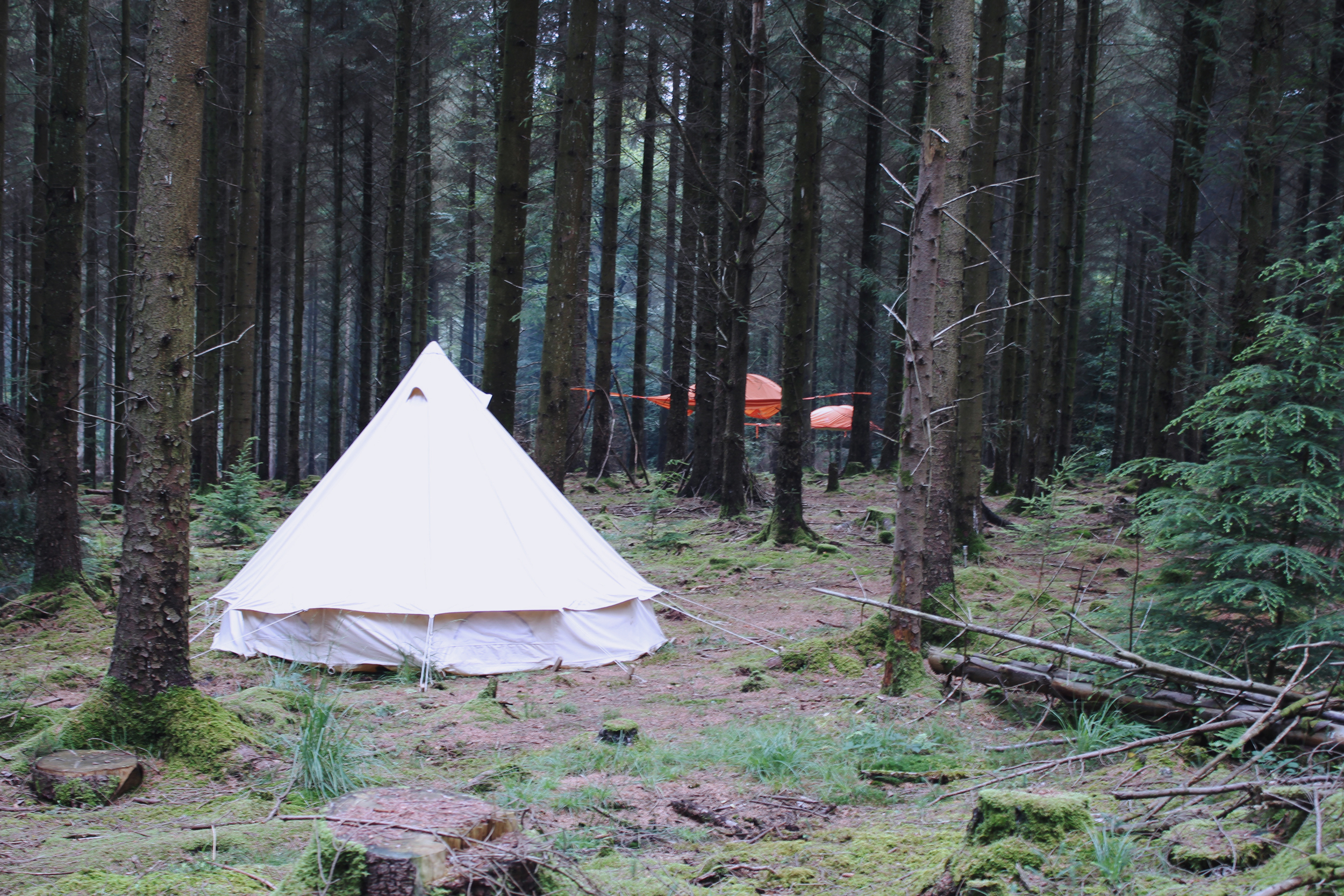 Bell tent in the woods, treetop camping
