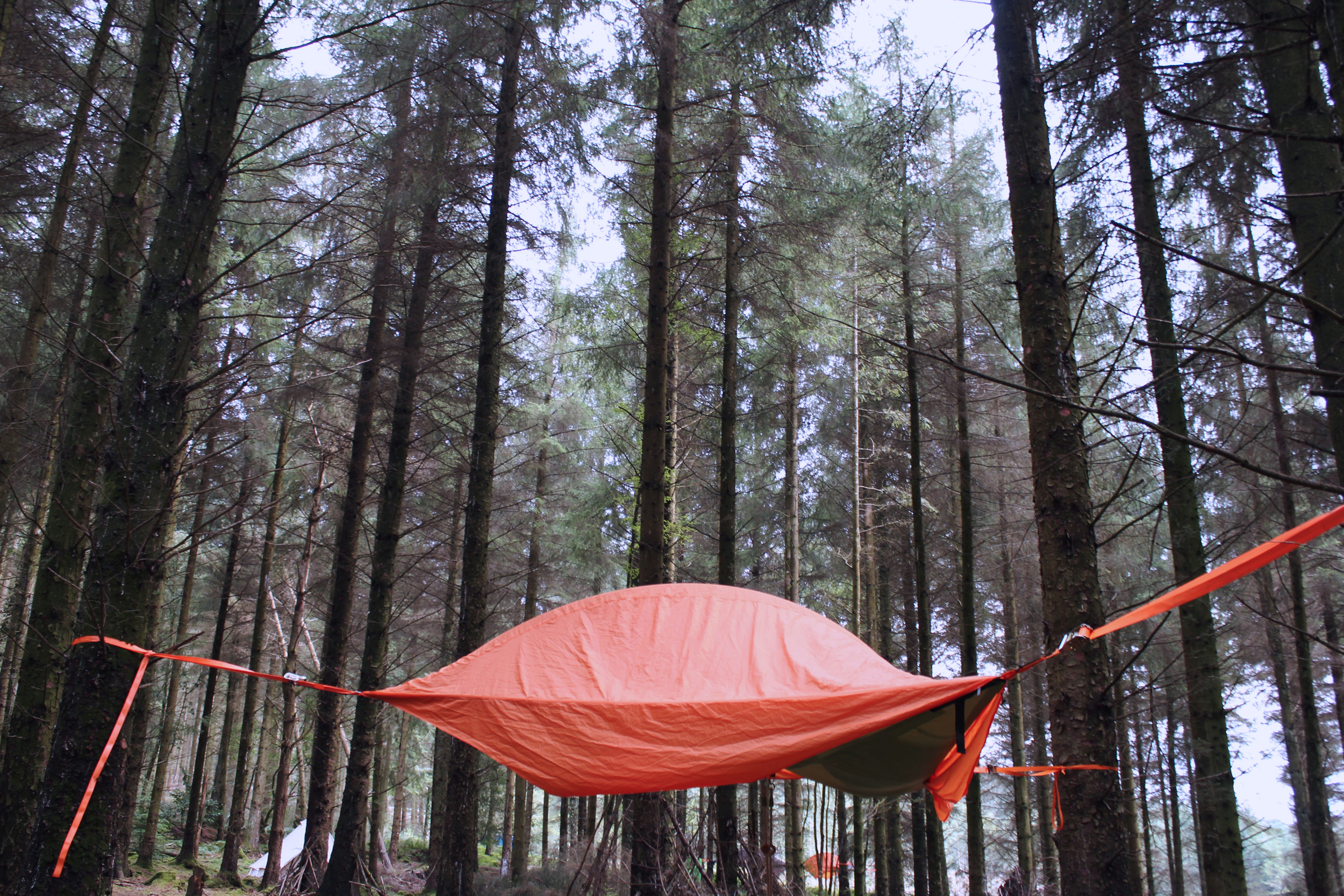 Treetop Camping in a pine forest