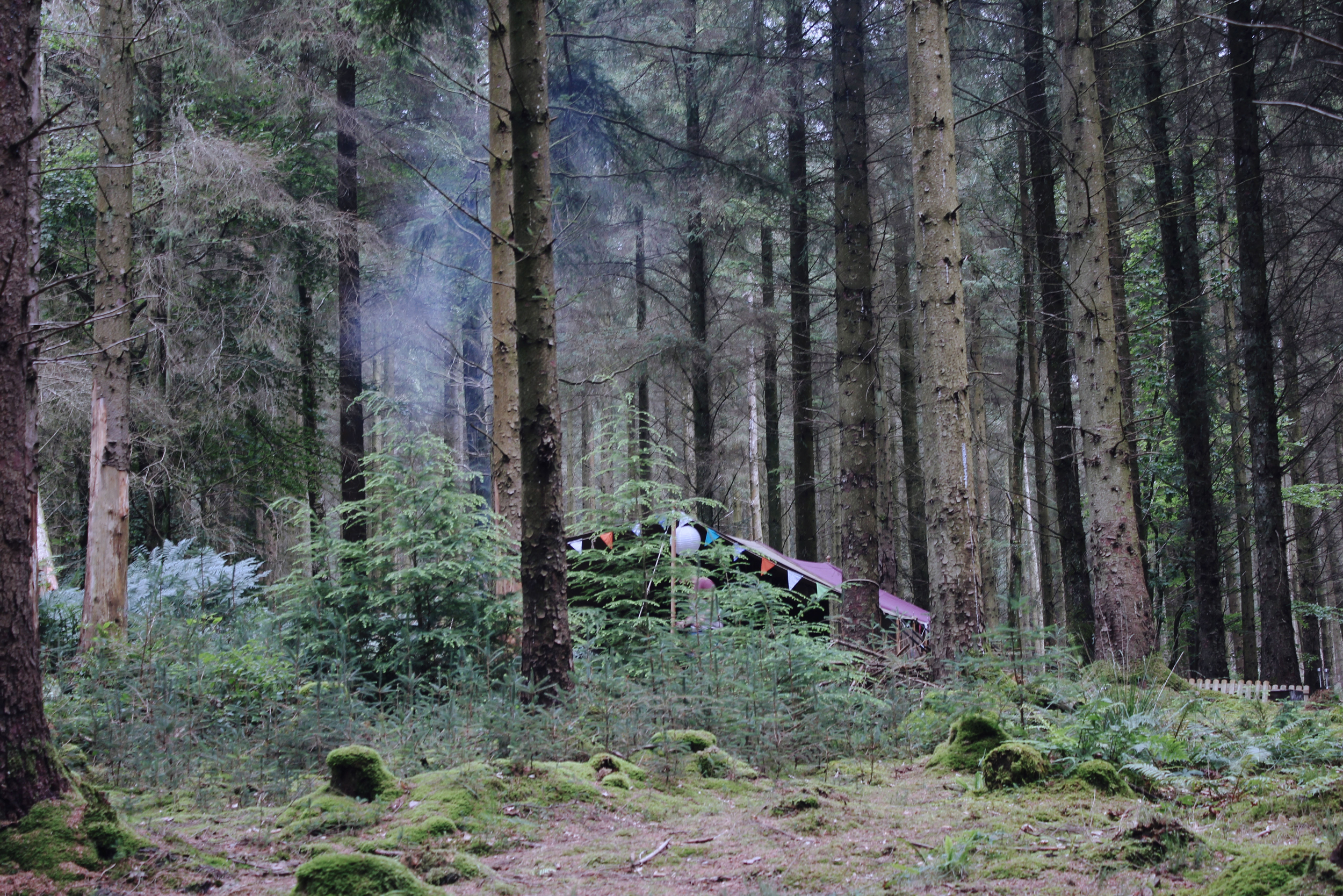 Camp in the forest, Devon