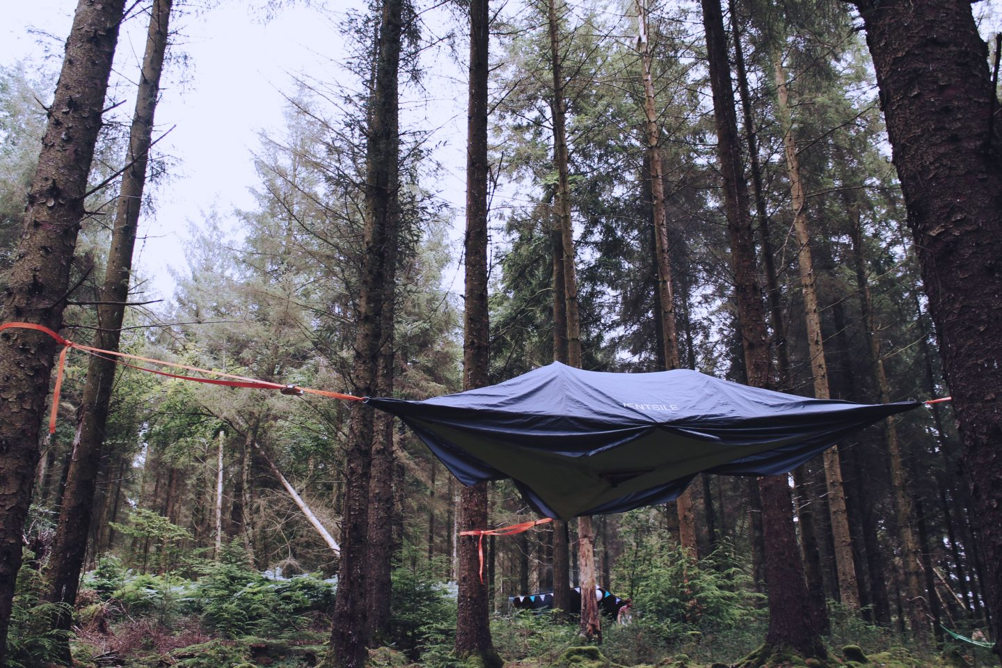 Treetop Camping in the Pine Forest