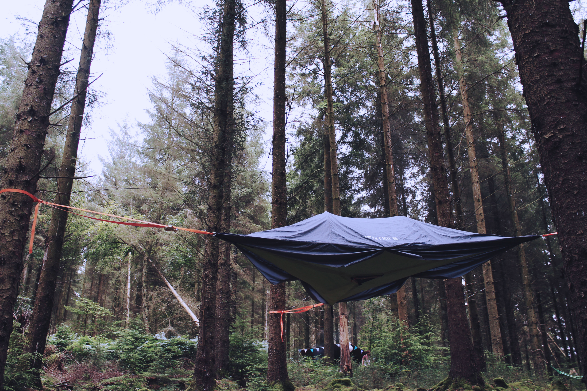 Treetop camping in the pine forest, Devon