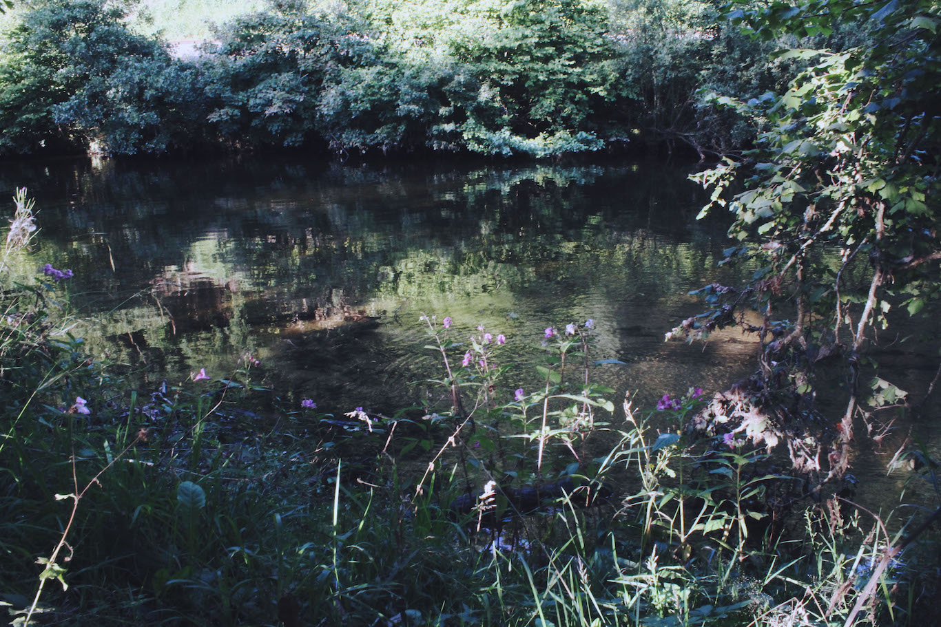 Wildflowers on the banks of the River Dart, Totnes
