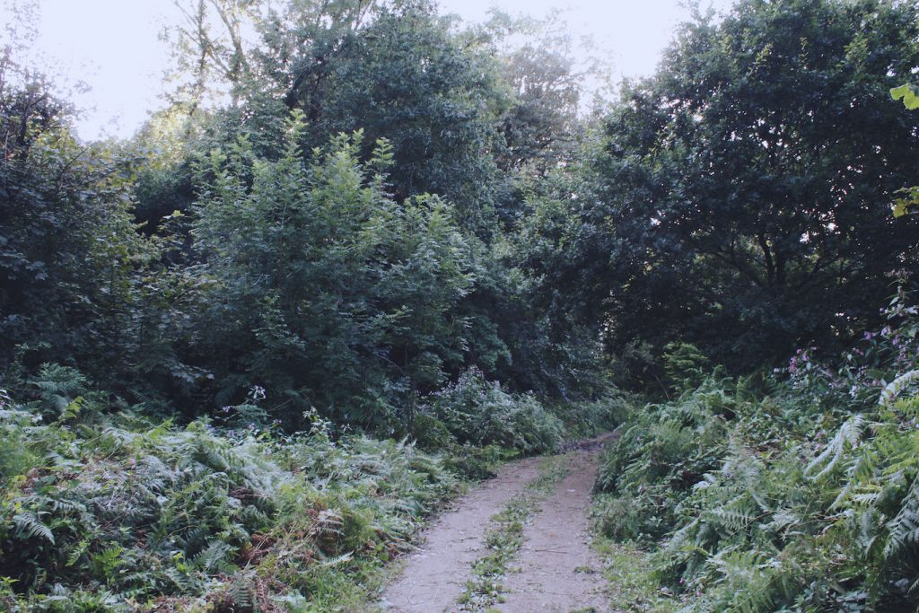 Into the Woods – Walks on the River Dart