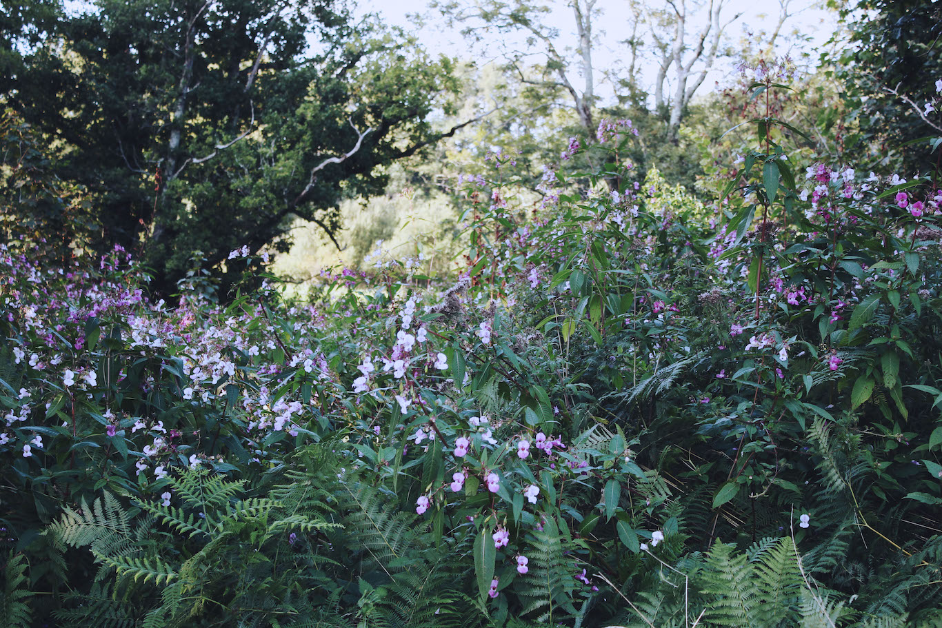Wildflowers along the banks of the River Dart