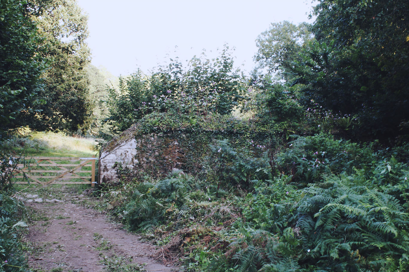 Wild gateways in Devon, England