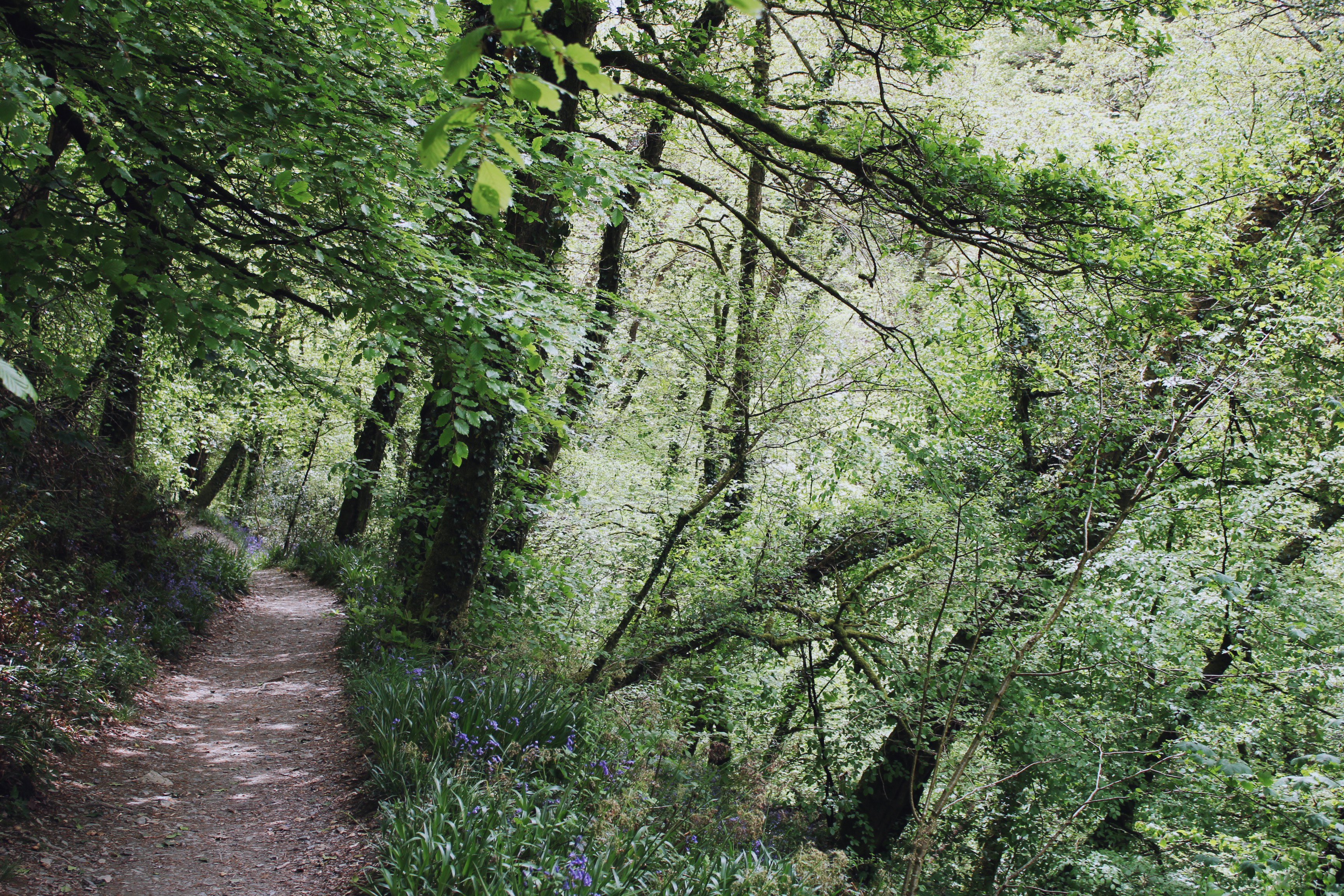 Path through the woodland in the summer, at Lydford Gorge, Devon