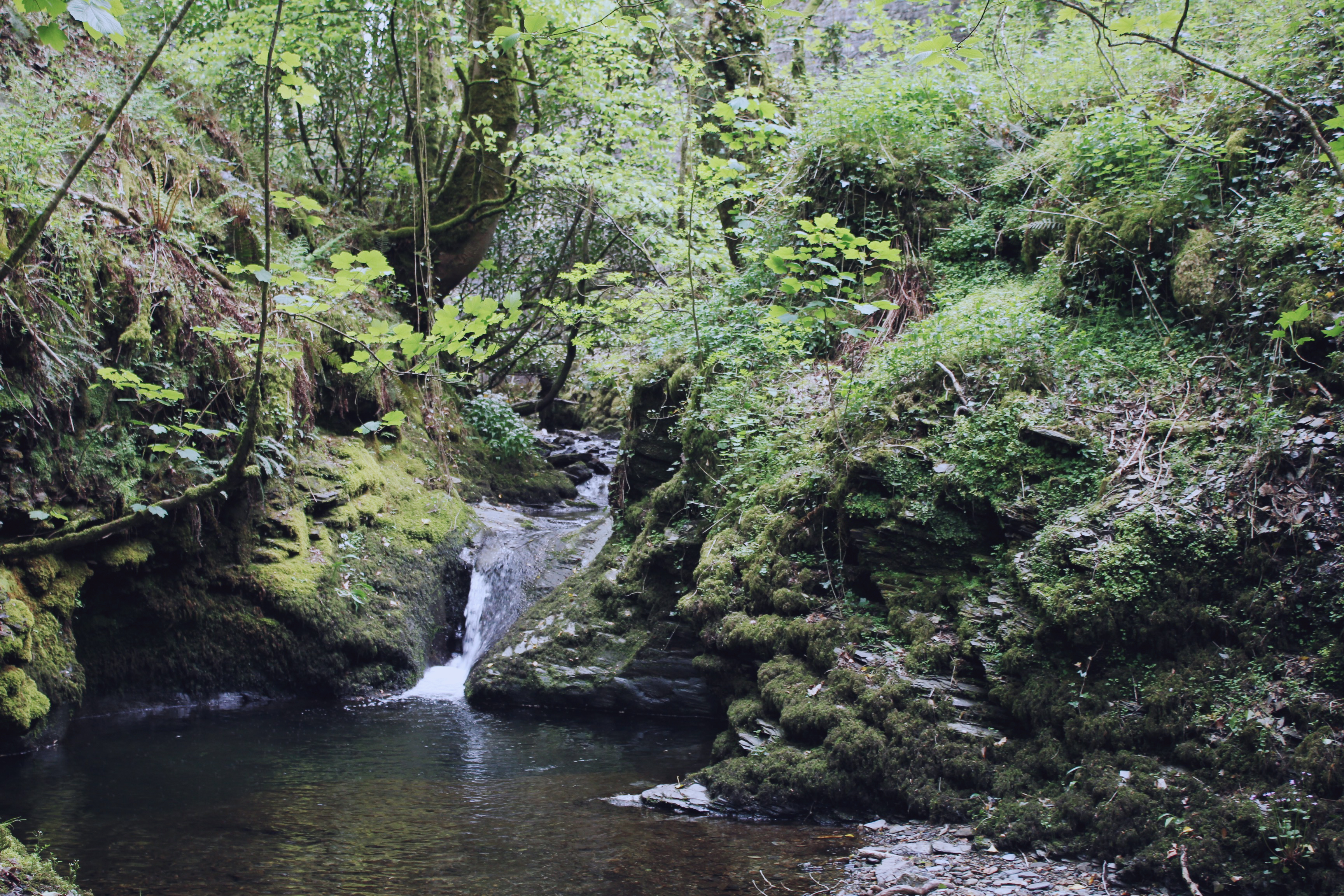 Hidden forest pool at Lydford Gorge