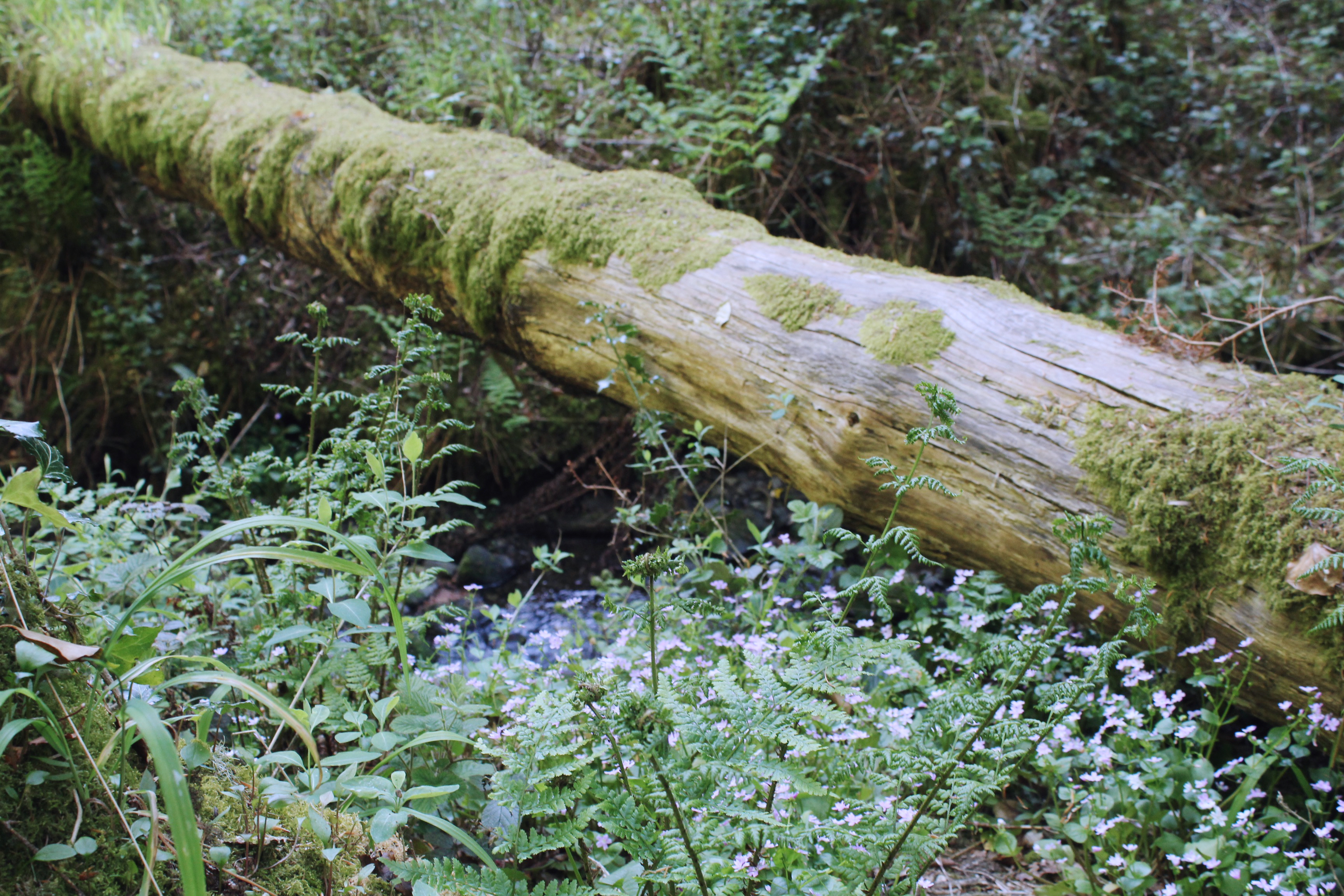 Wildflowers and moss covered logs on the forest floor at Lydford Gorge