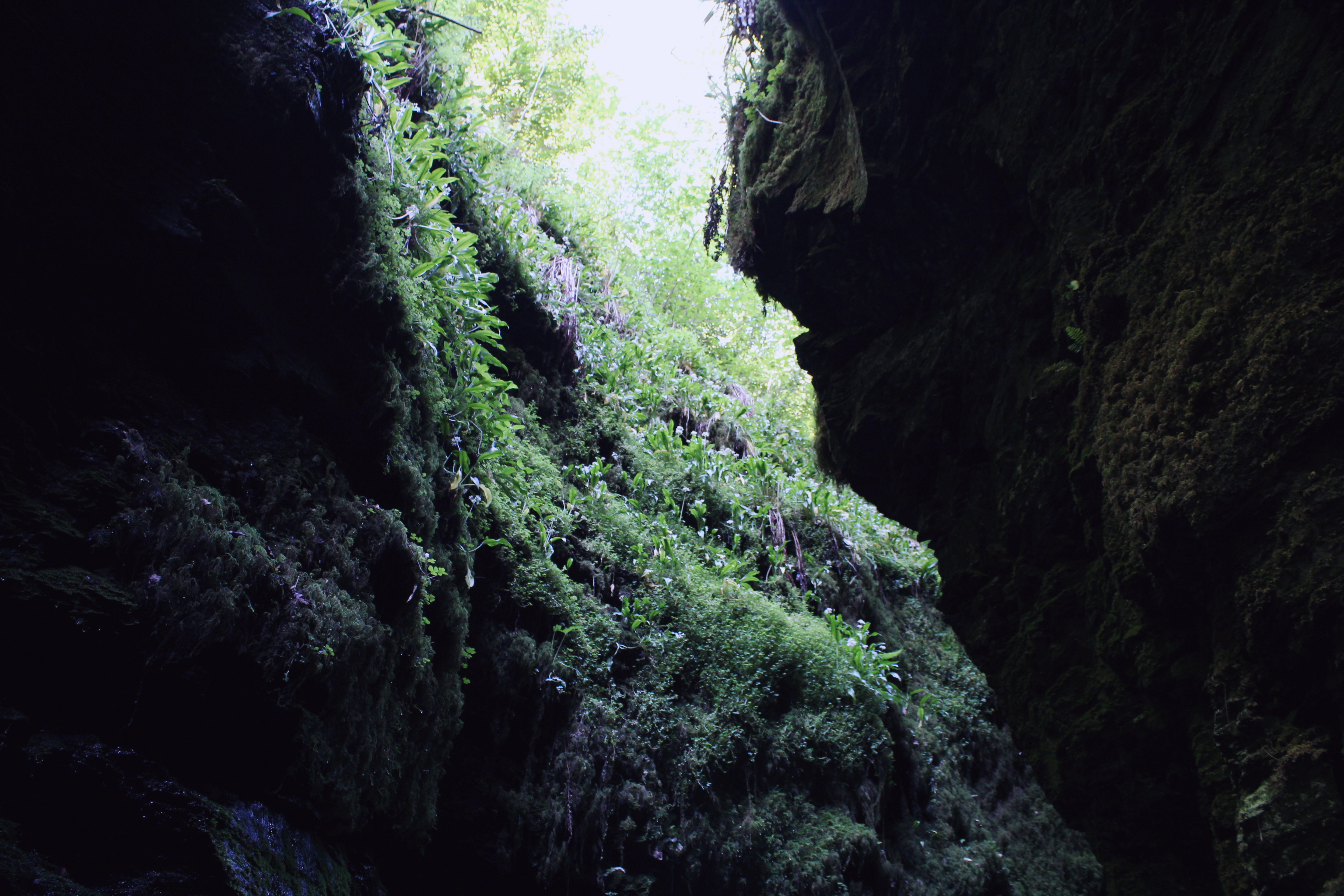 Looking upwards from the dark at Lydford Gorge, Devon