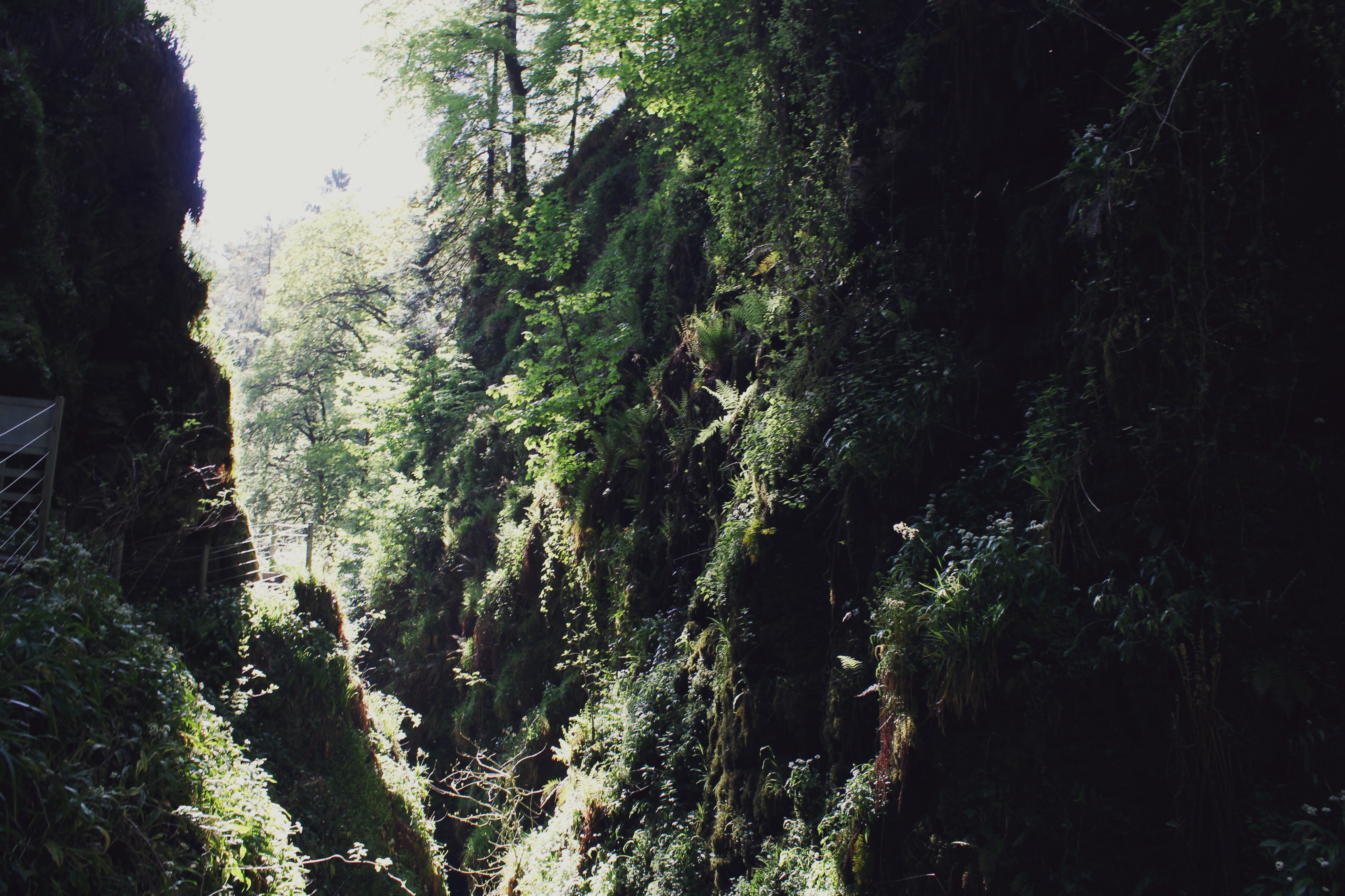 Lush greenery on the sides of Lydford Gorge, Devon