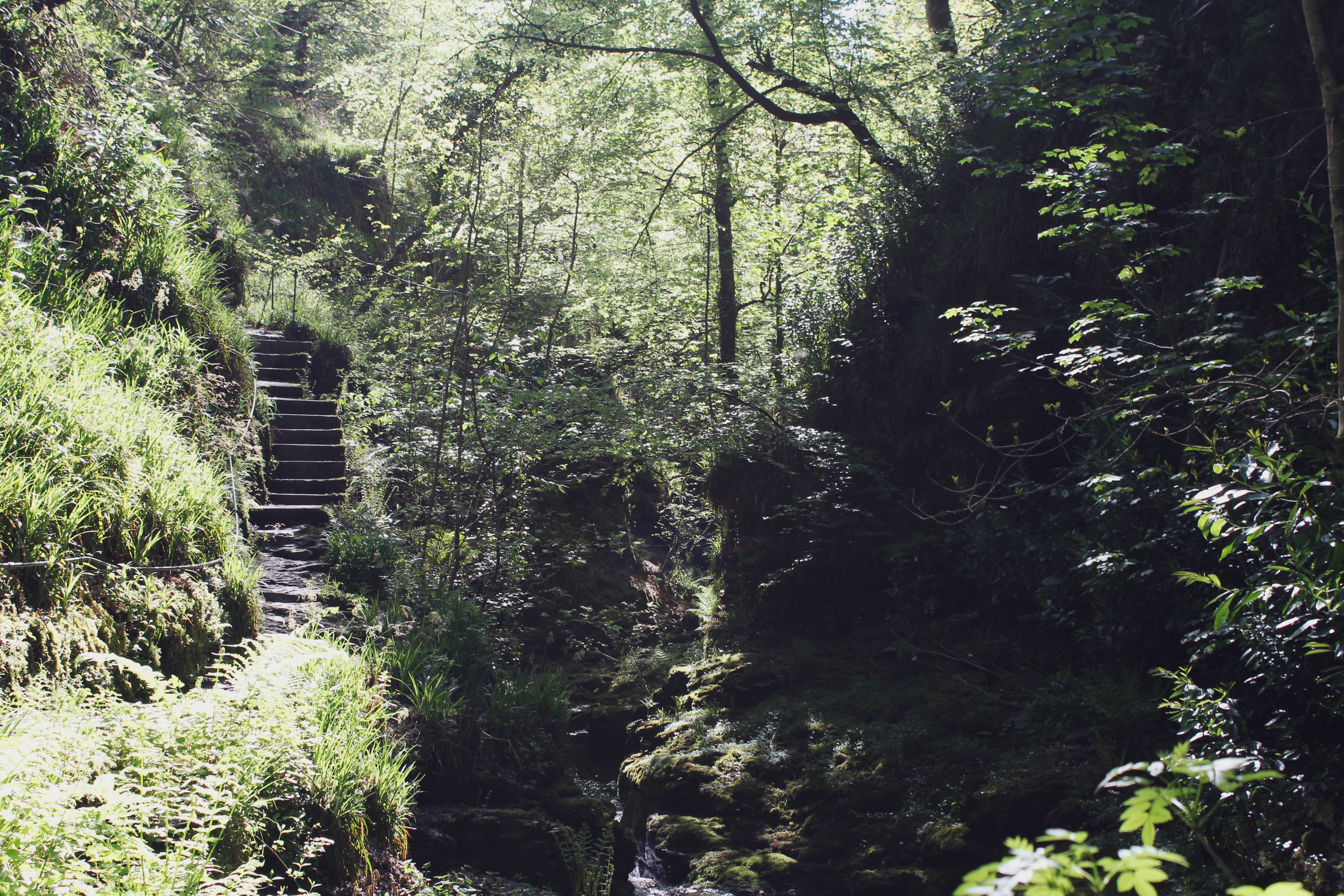 Stairway through the forest at Lydford Gorge, Devon