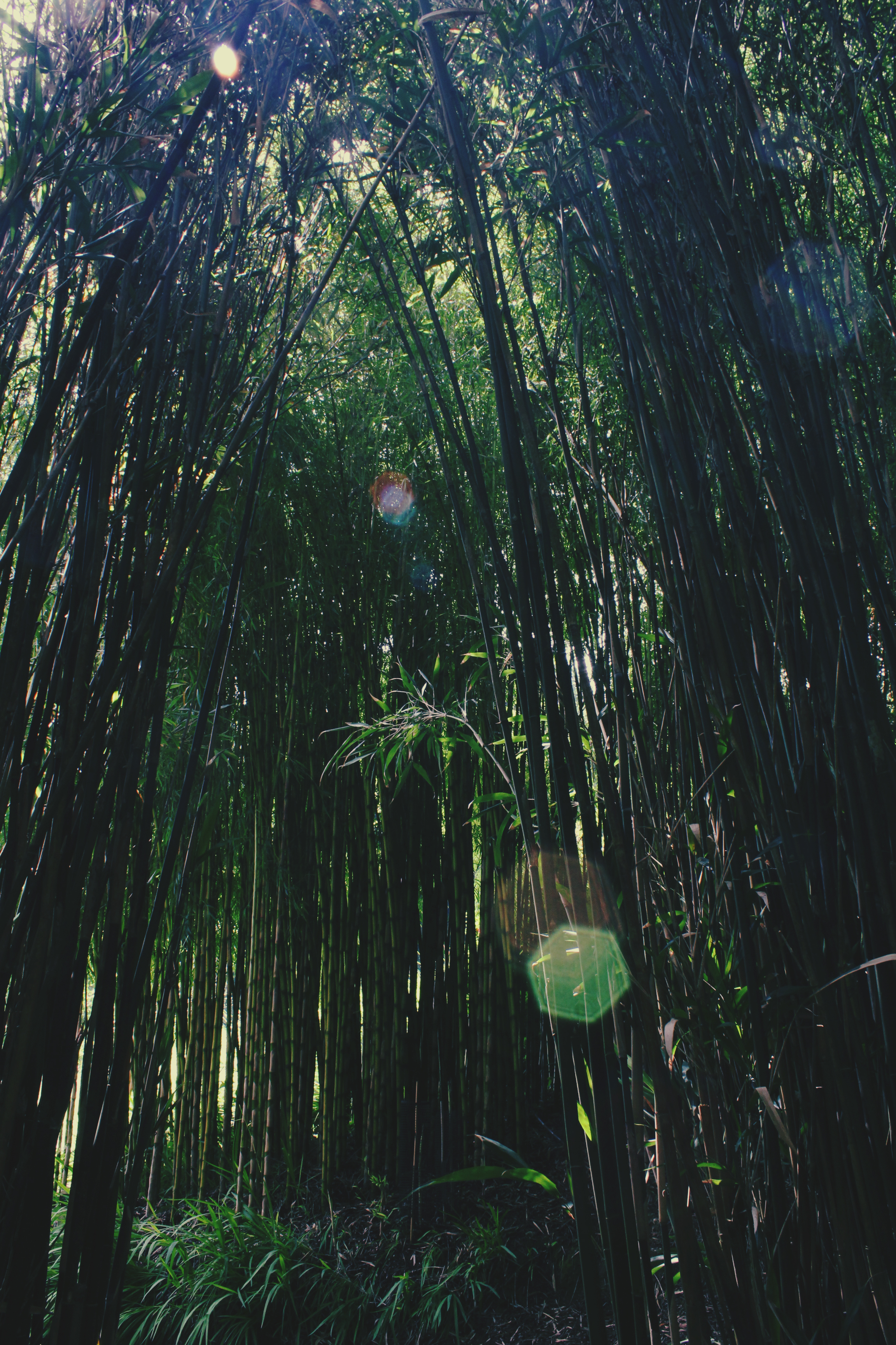 Sun spots in the bamboo grove, Trebah Gardens