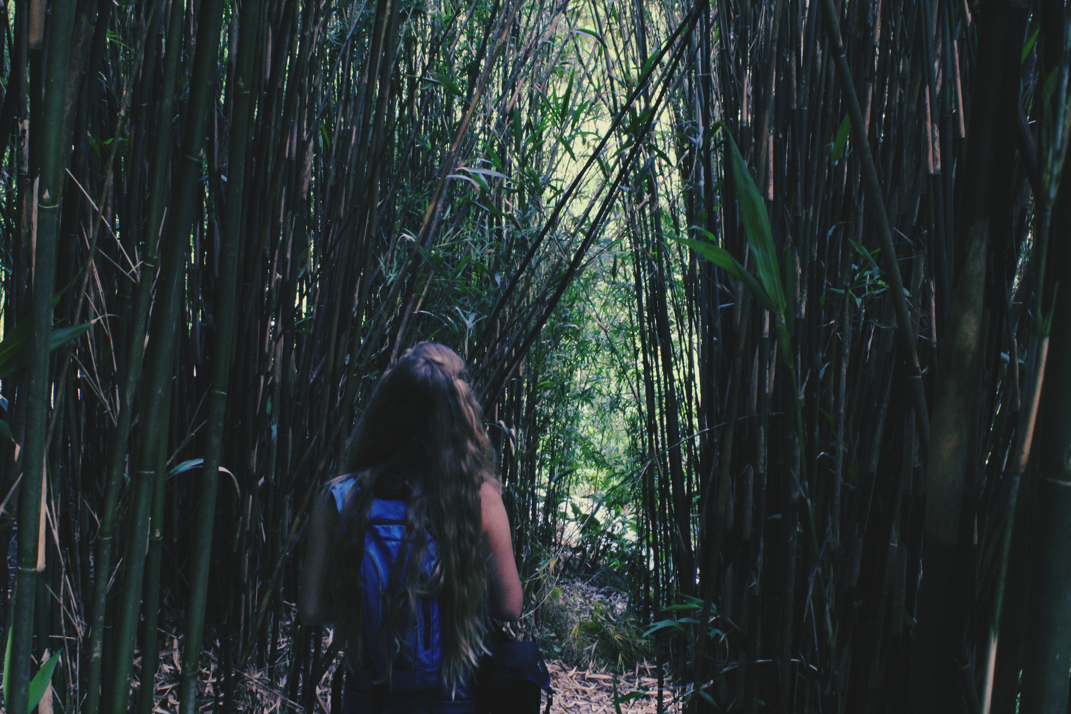 Girl walking through bamboo forest in Trebah Gardens, Cornwall