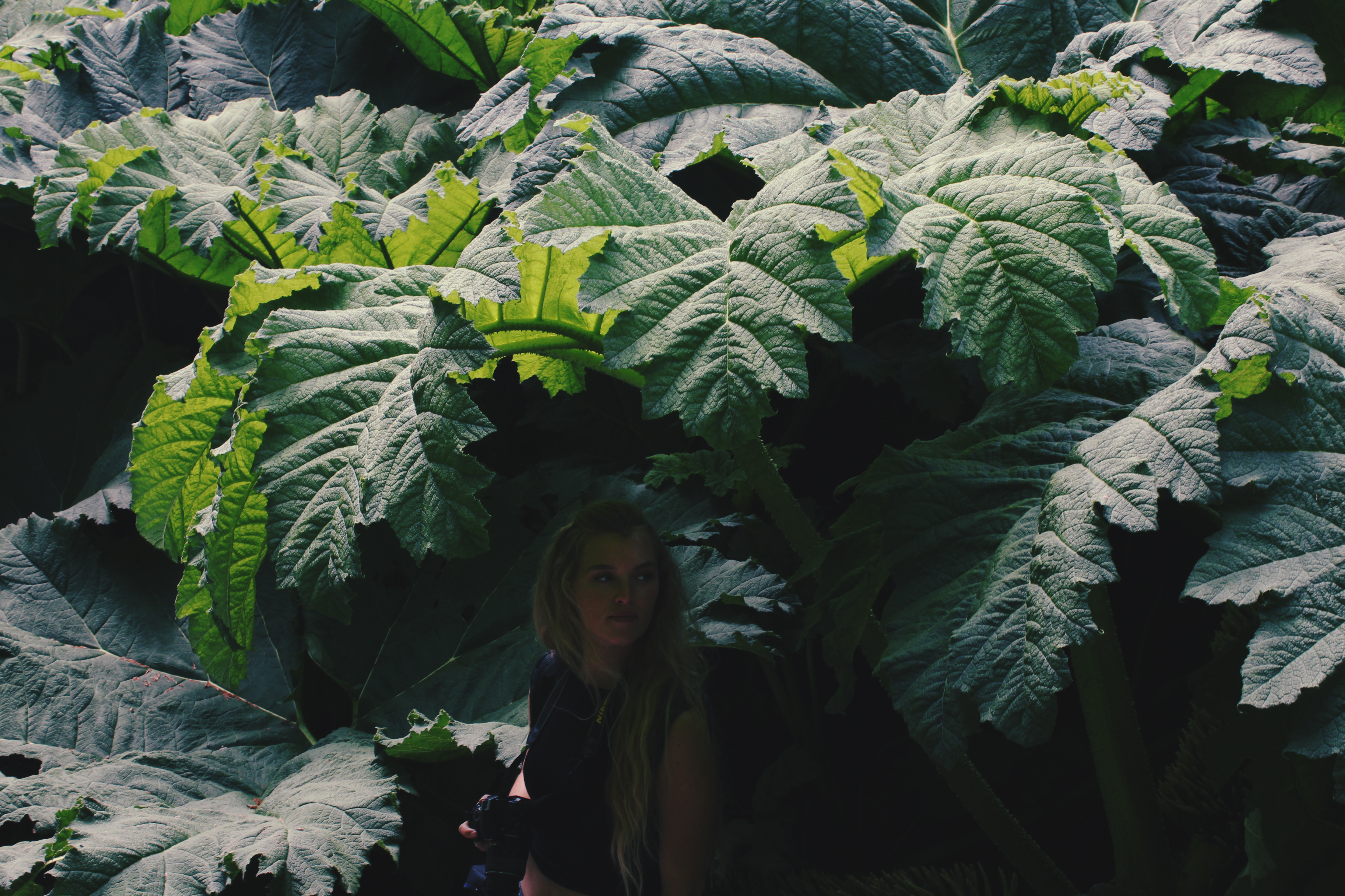 Girl standing beneath gunnera leaf canopy