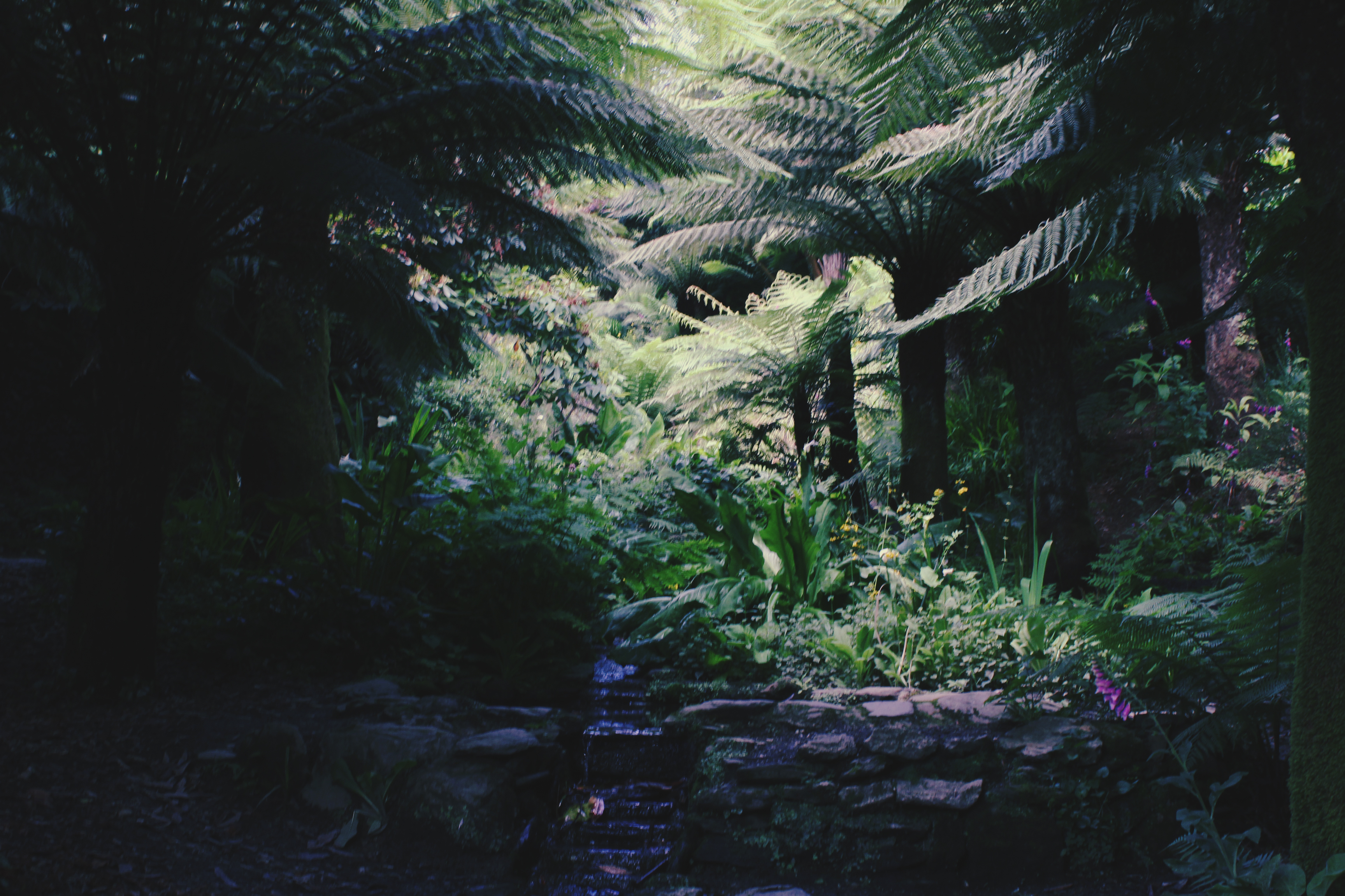 A fountain in a fern grove at Trebah Gardens, Cornwall