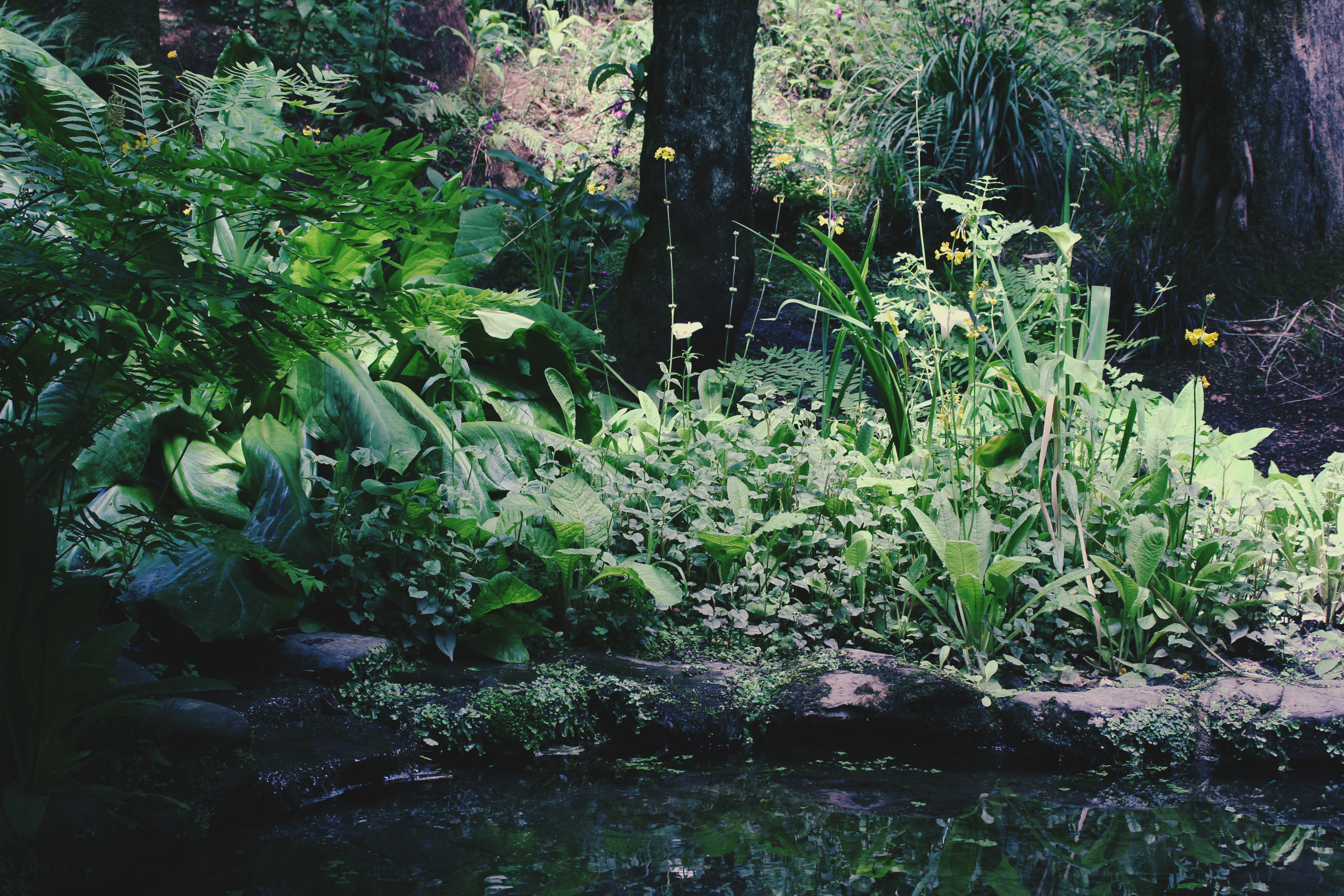 Wild pond at Trebah Gardens, Cornwall