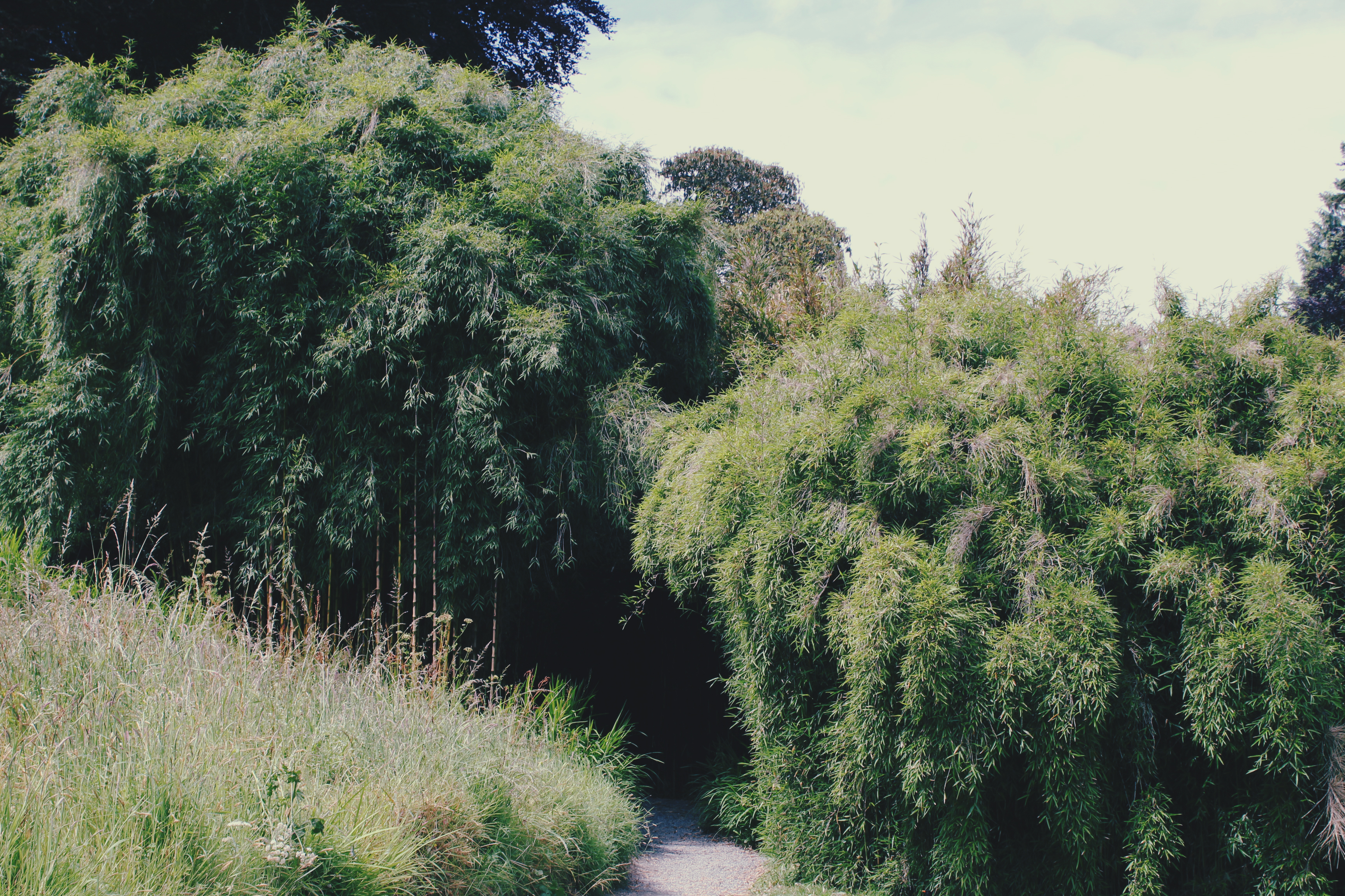 Entrance to the bamboo forest at Trebah Gardens, Cornwall