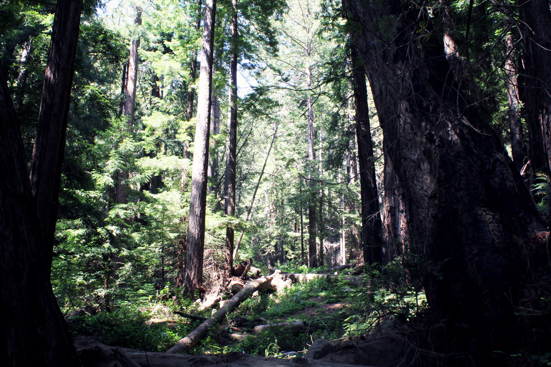 Big Sur Redwood Canyons
