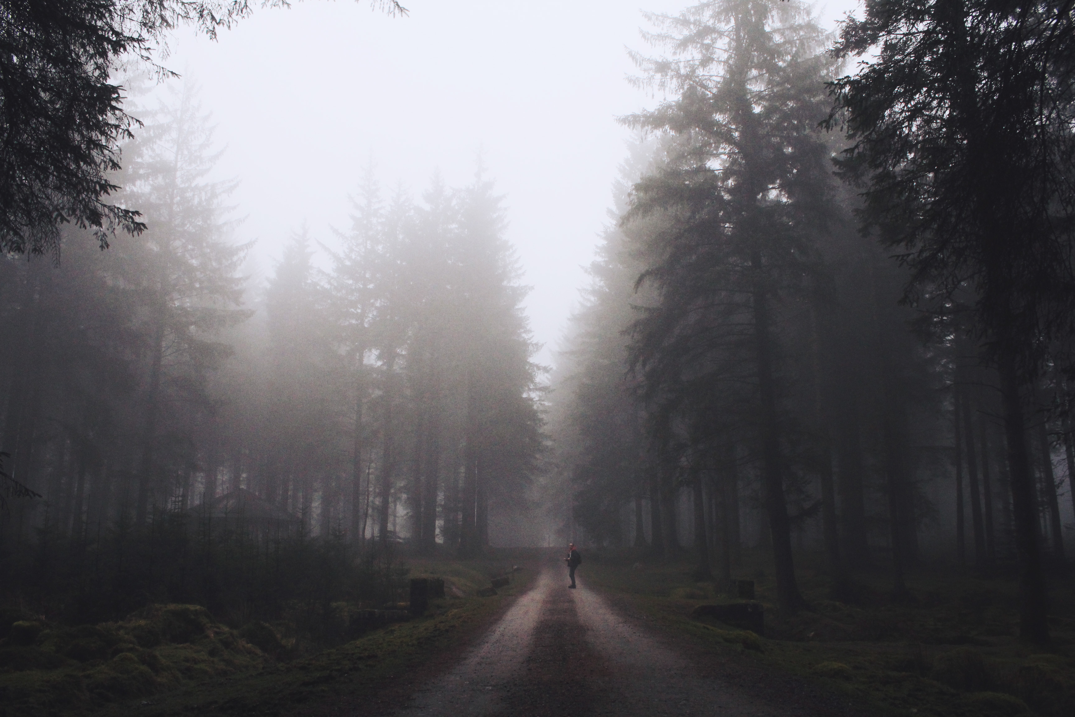 Dark, misty pine trees at Bellever Forest, Dartmoor