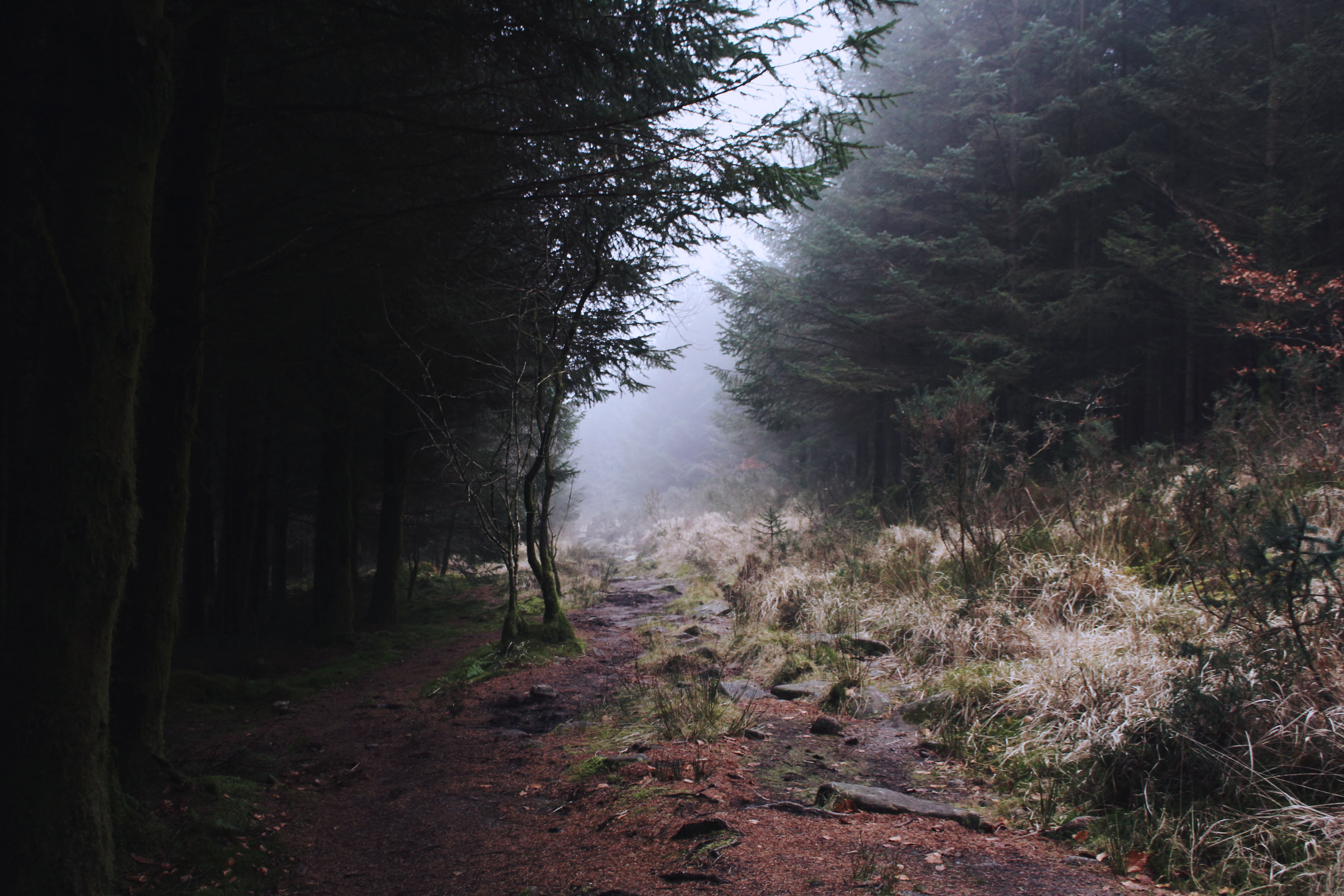 Magical woodland paths at Bellever Forest, Dartmoor