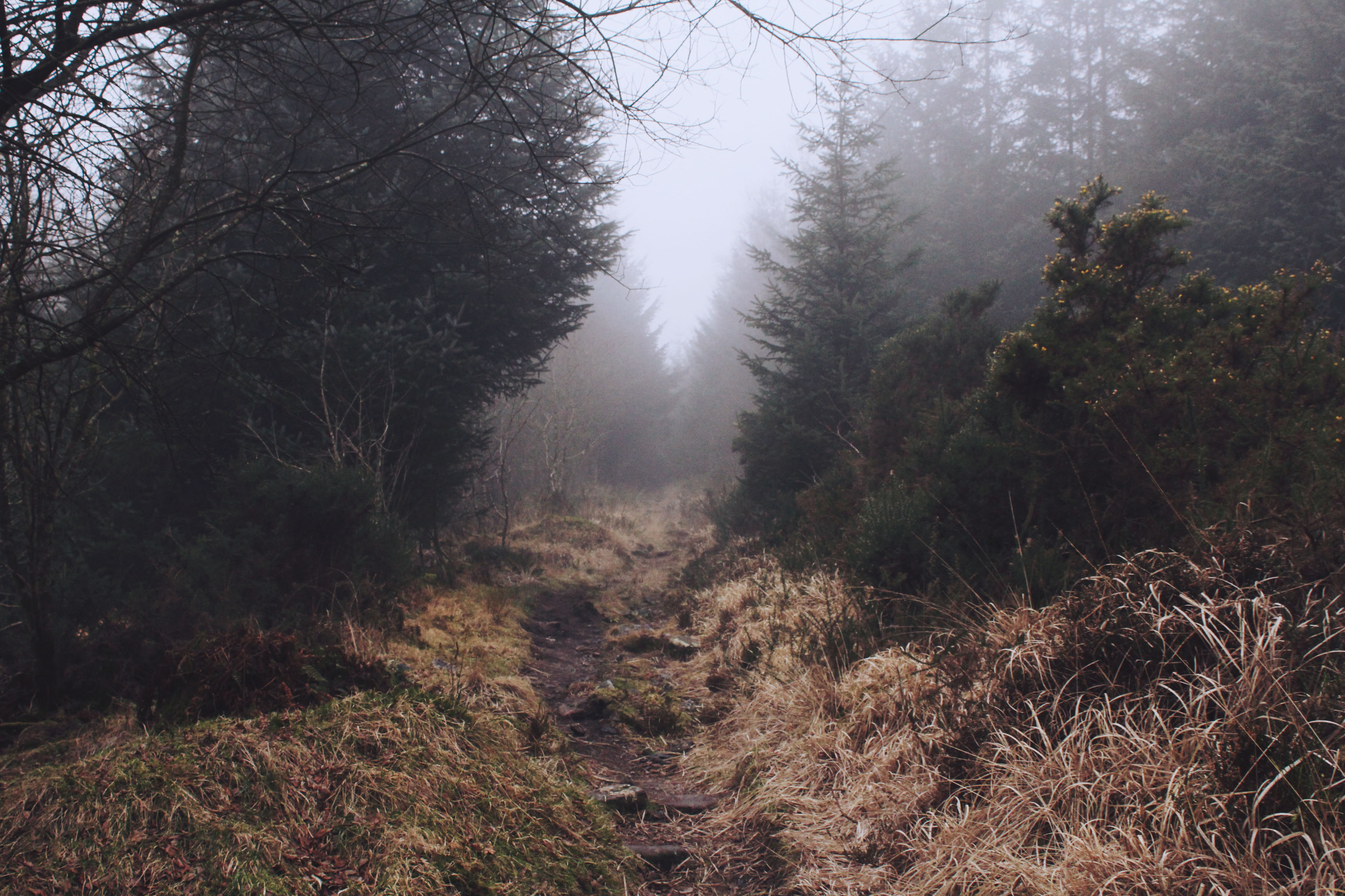 Wild paths at Bellever Forest, Dartmoor