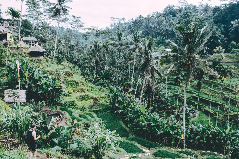 Exploring Tegallalang Rice Terraces