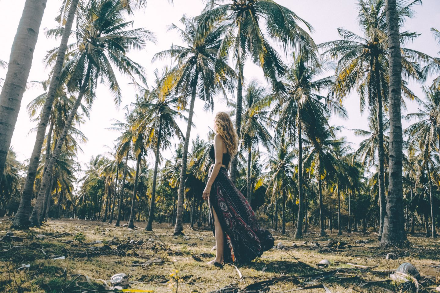 Into the Coconut Forest