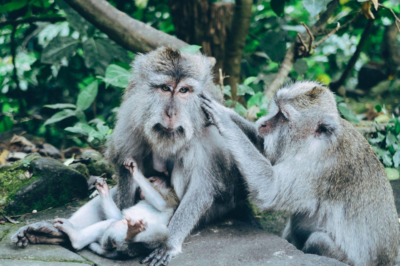Monkeying Around in Ubud