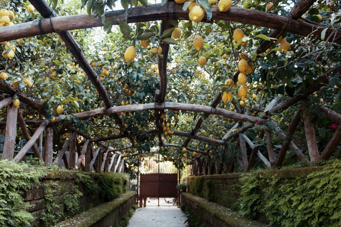Best Cafe in Sorrento, Lemon Archway
