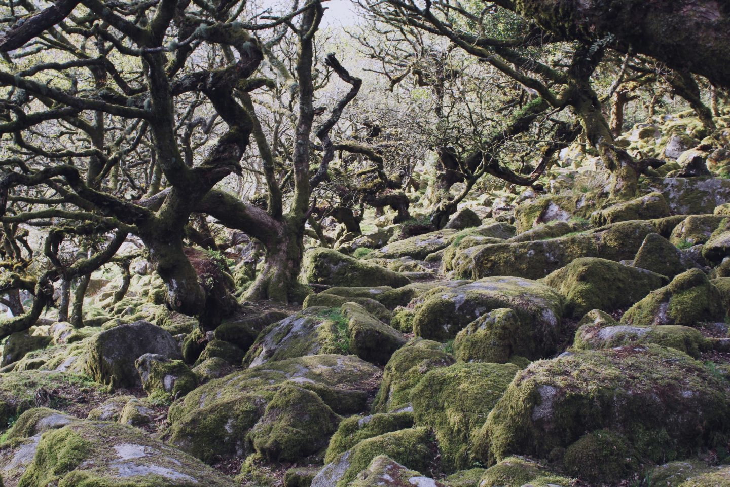 Enchanted Woodland at Wistman's Wood, Dartmoor