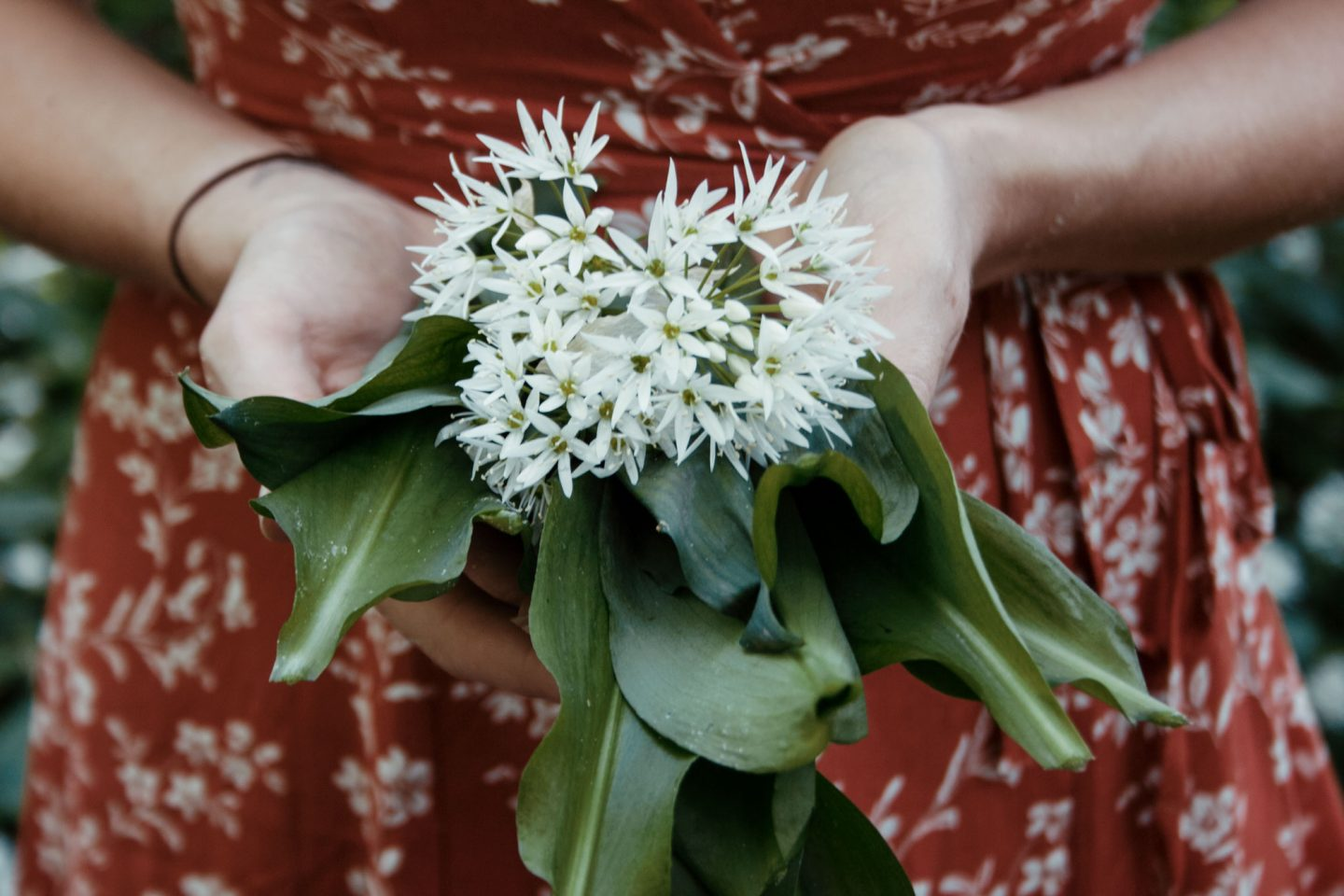 A Mini Guide to Foraging Wild Garlic