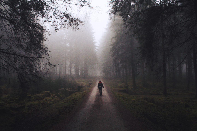 Winter Mist at Bellever Forest, Dartmoor