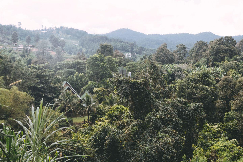 Elephant Jungle Sanctuary | Part 2